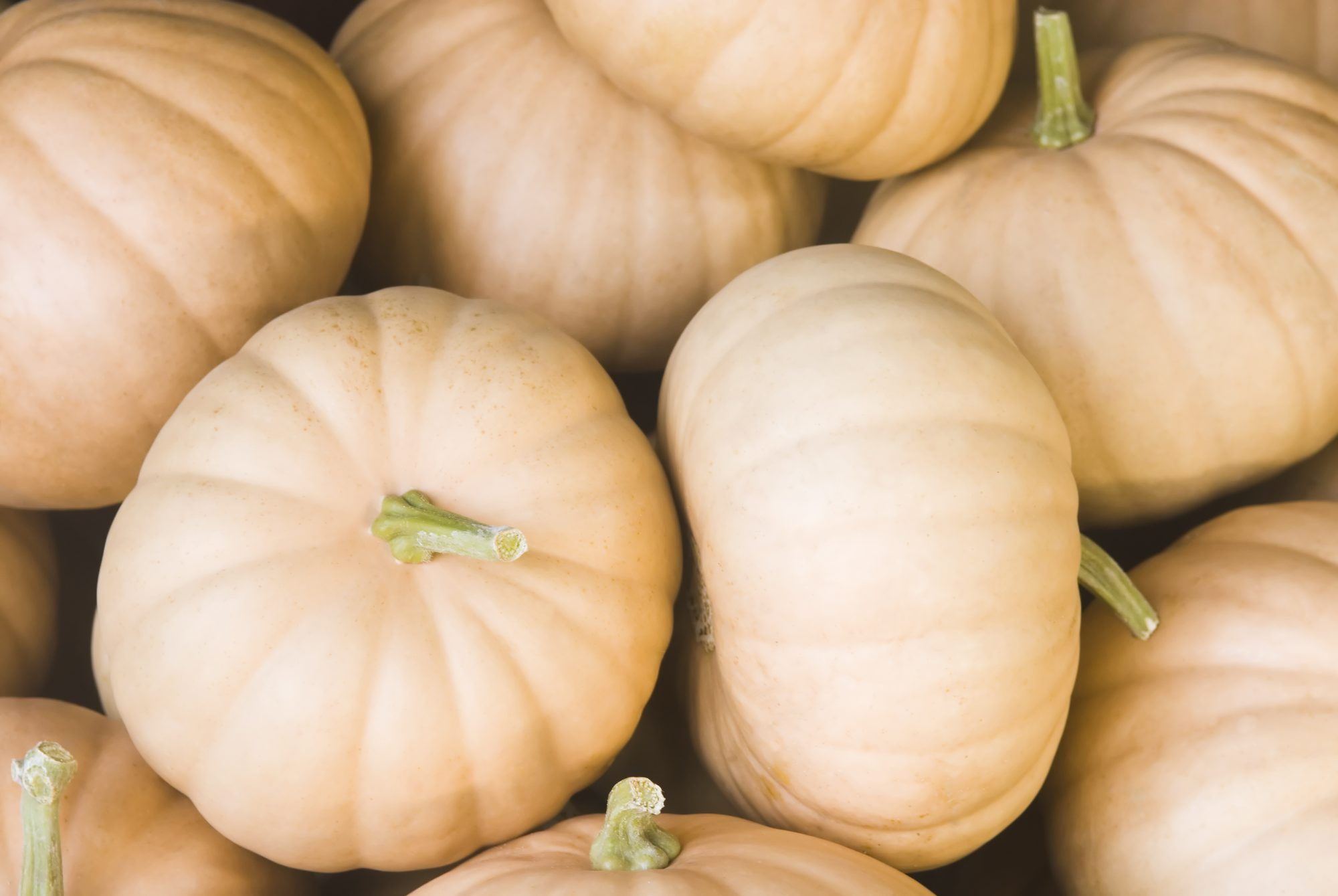 How to Pick the Best Pumpkin for Cooking