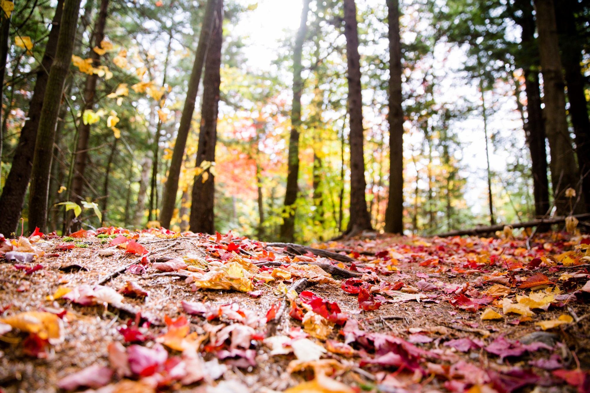 Red Leaves on the Ground During Fall