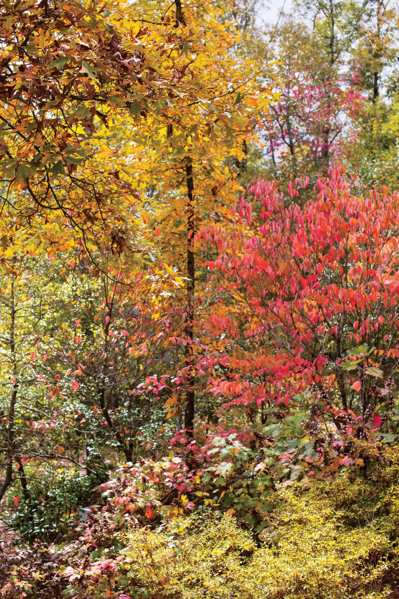 Sara Hedstrom Pinnell Walland, TN Cabin Fall Color