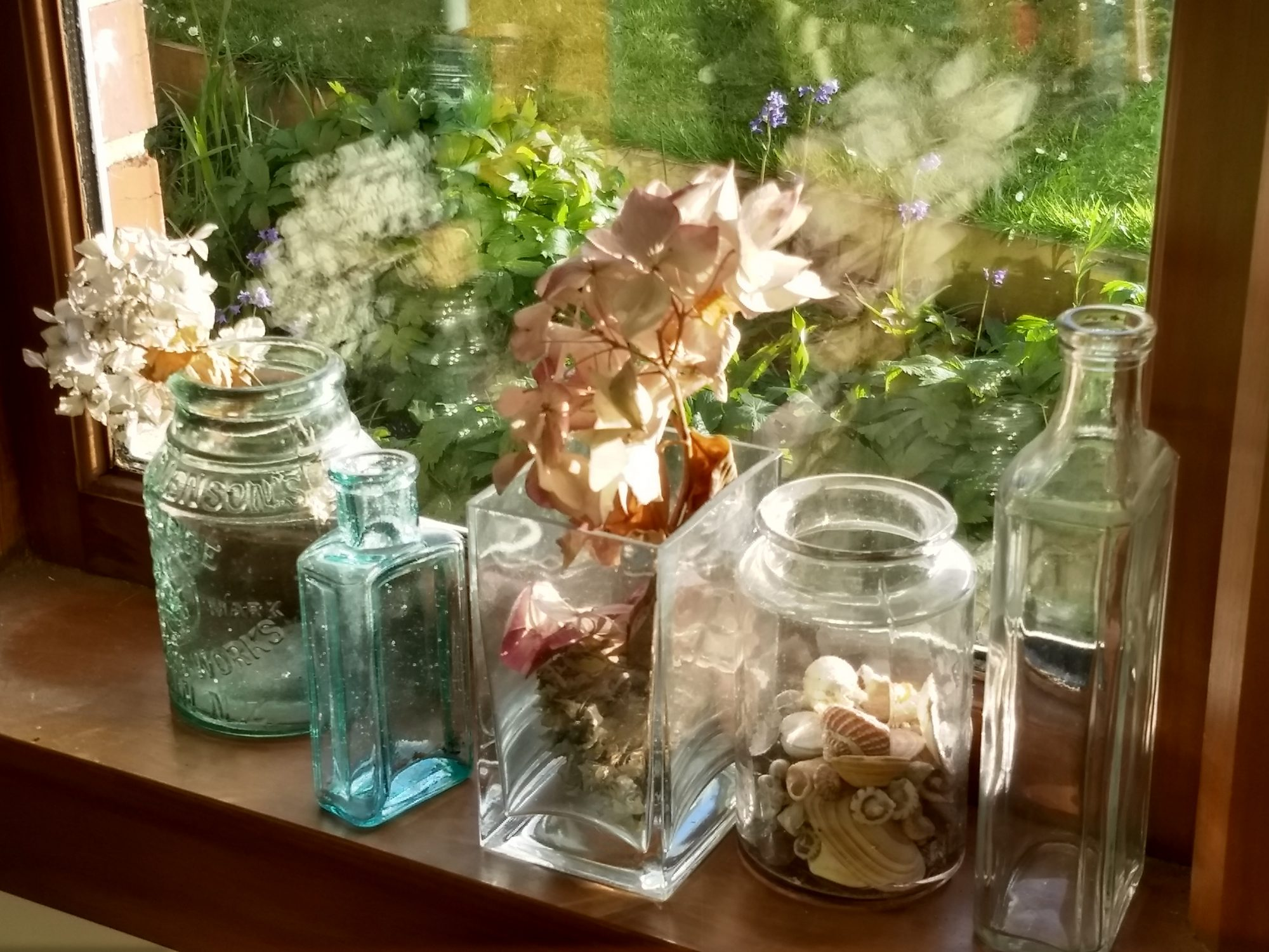 Dried Flowers by Window