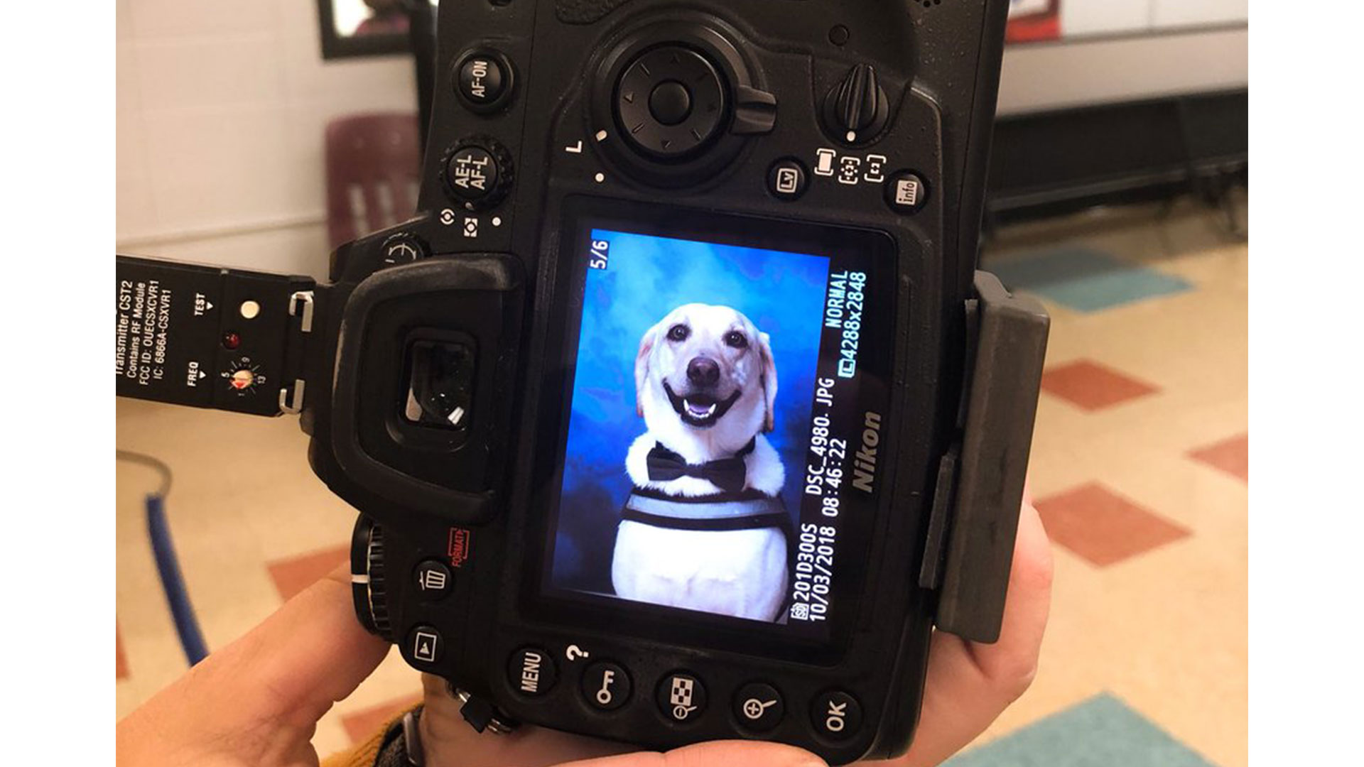 Service Dog Yearbook Photo Rowdy
