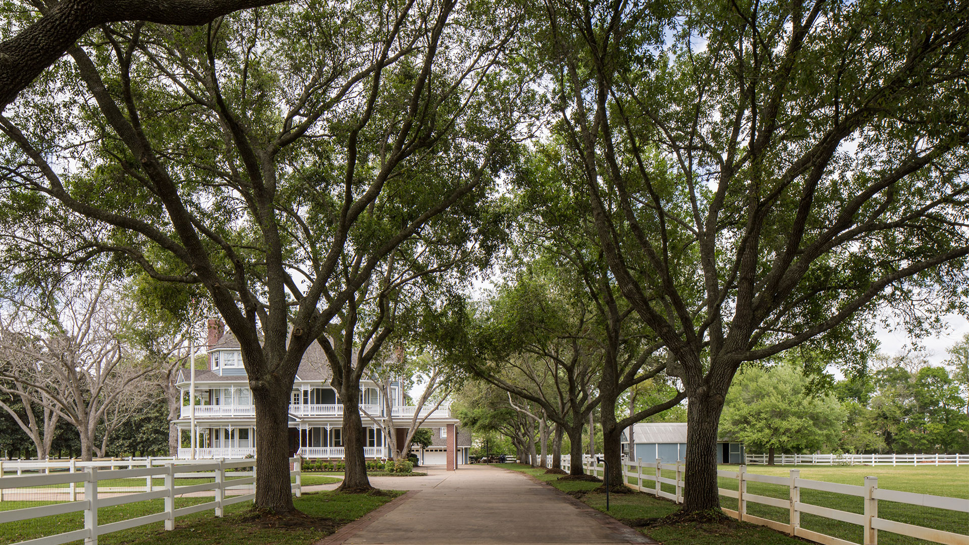 Tree-Lined Drive