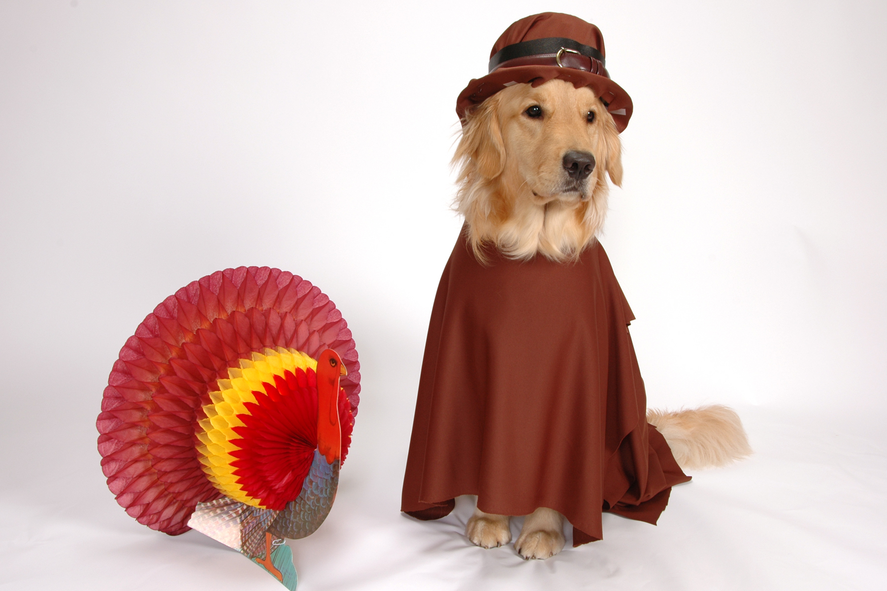 Thanksgiving Dog