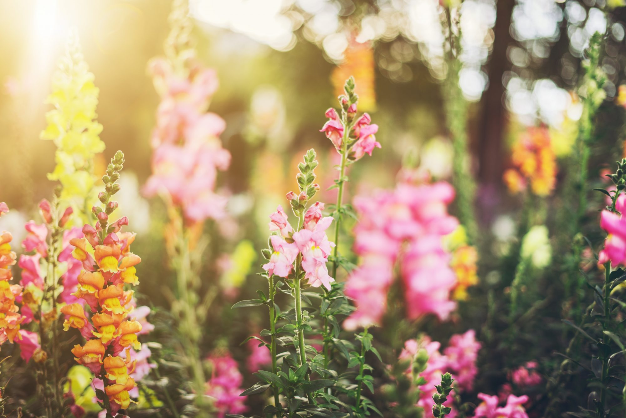 What's the Difference Between Annuals and Perennials?