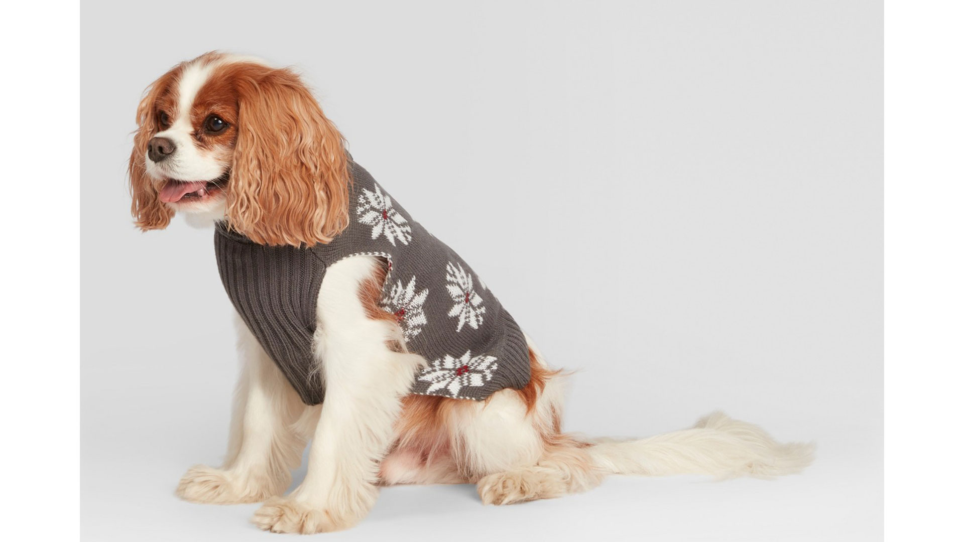 Joanna Gaines Target Dog Sweater