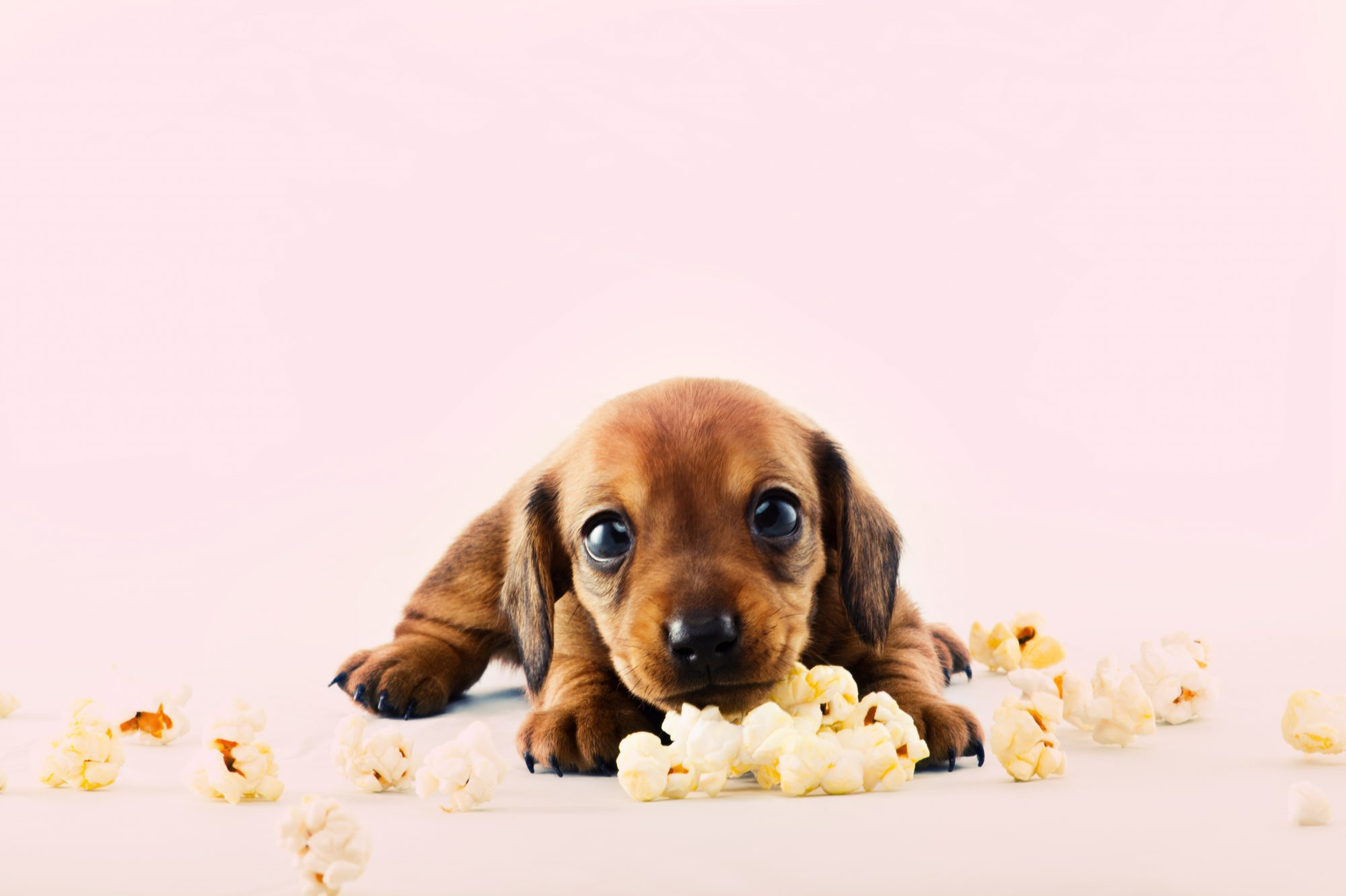 Puppy and Popcorn