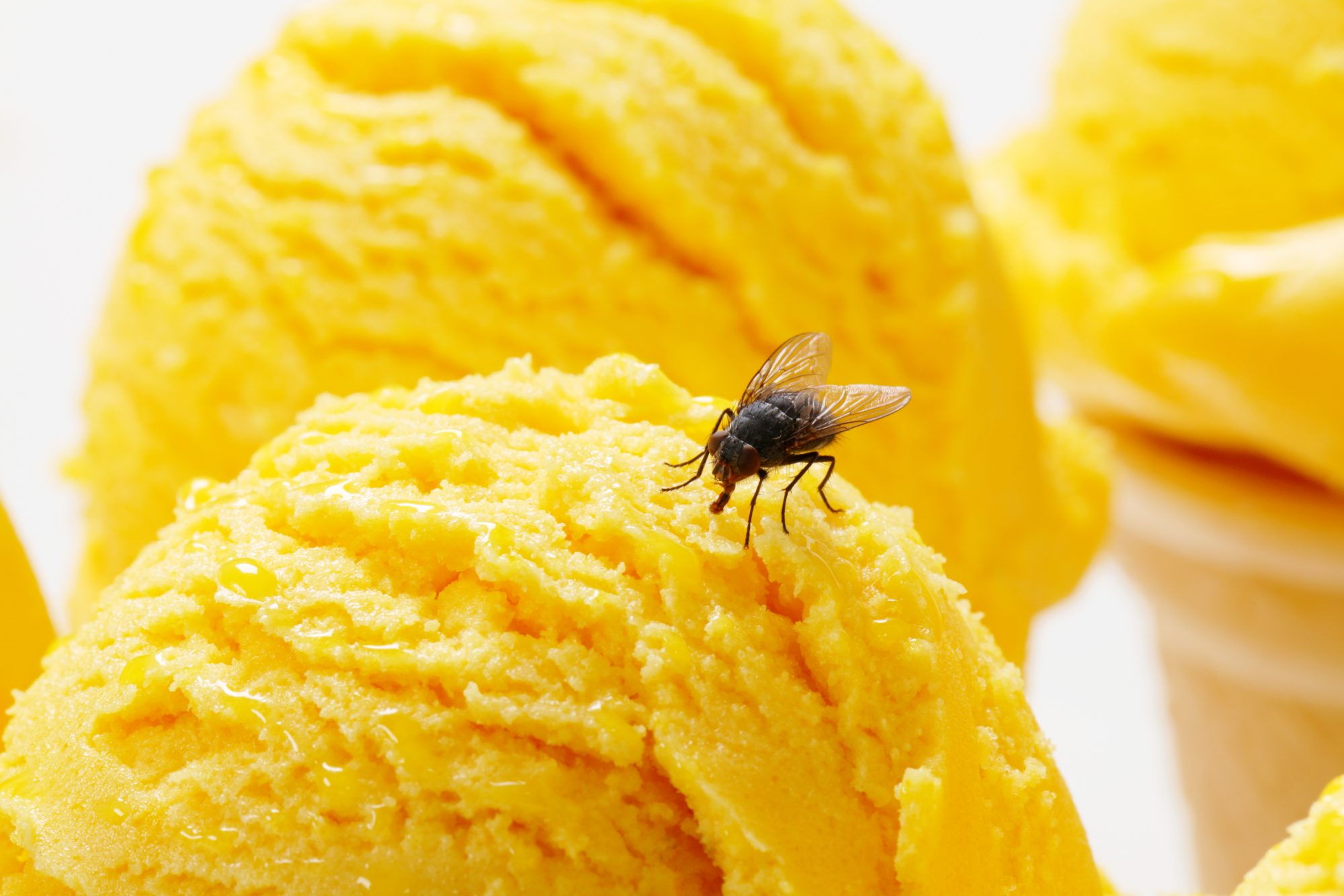 Fly on Ice Cream