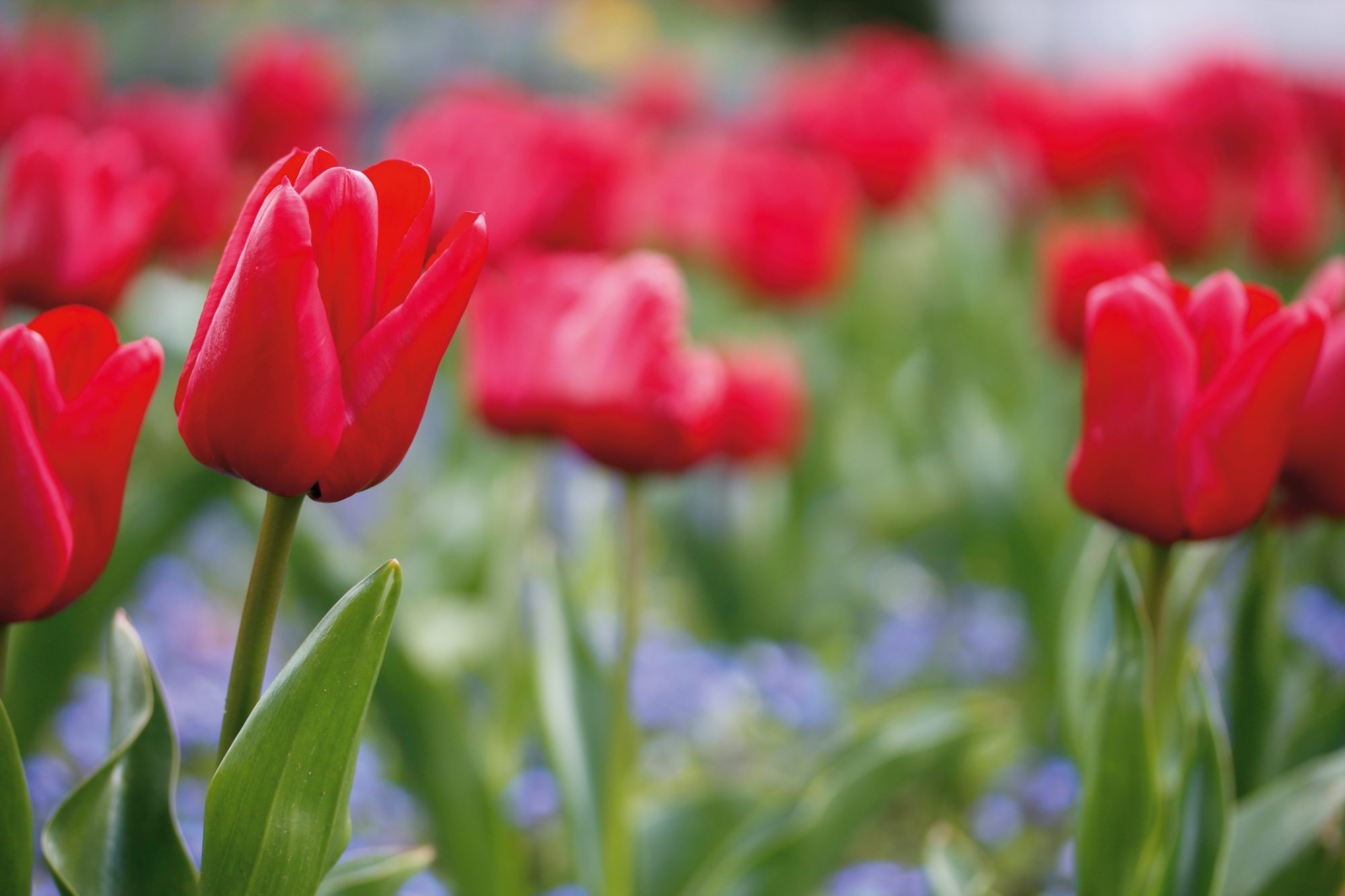 5 Signs You Should Join a Garden Club