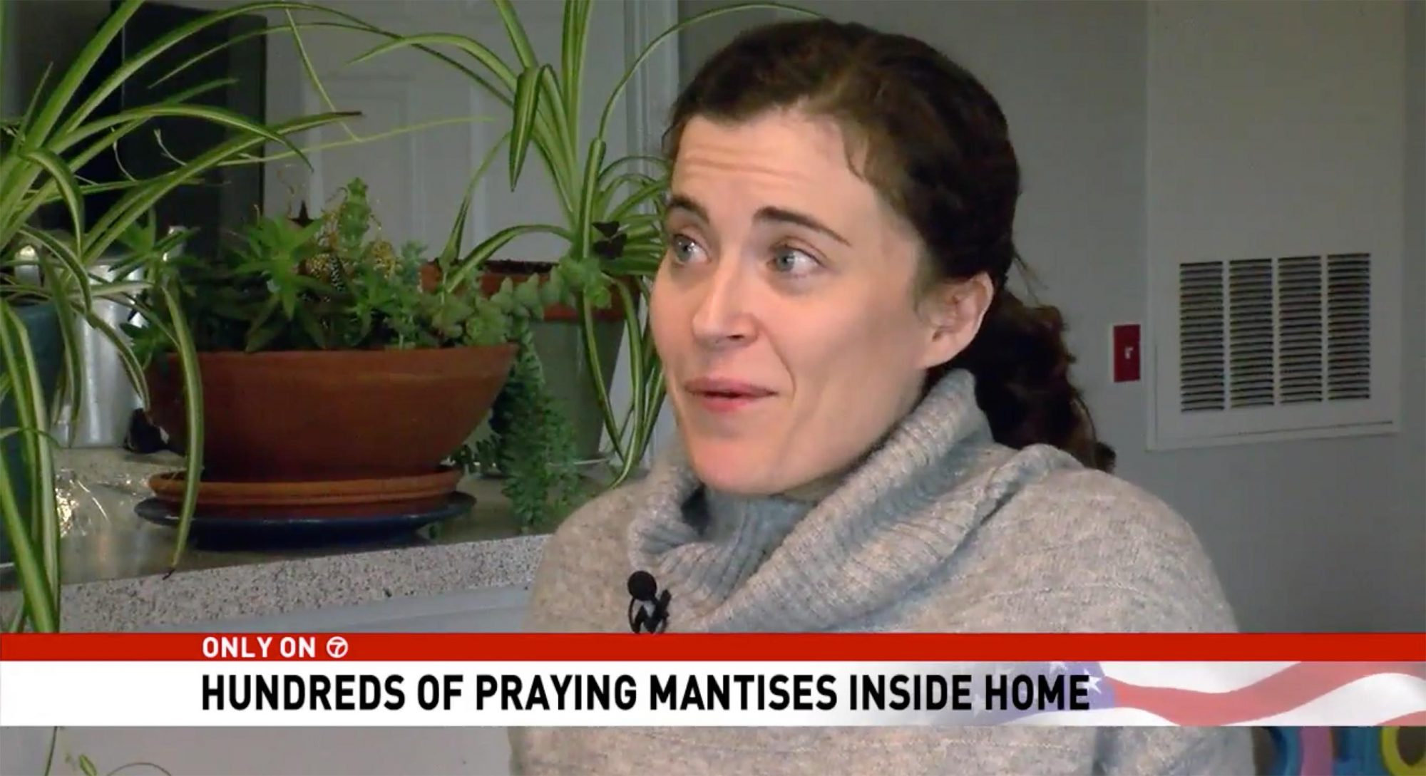 Virginia Woman's Home Invaded by More Than 100 Praying Mantises Brought in by Christmas Tree