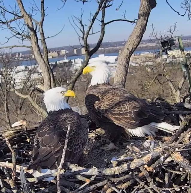 After 14 Years Together, Liberty and Justice, D.C.'s Famous Bald Eagle Couple, Are No More