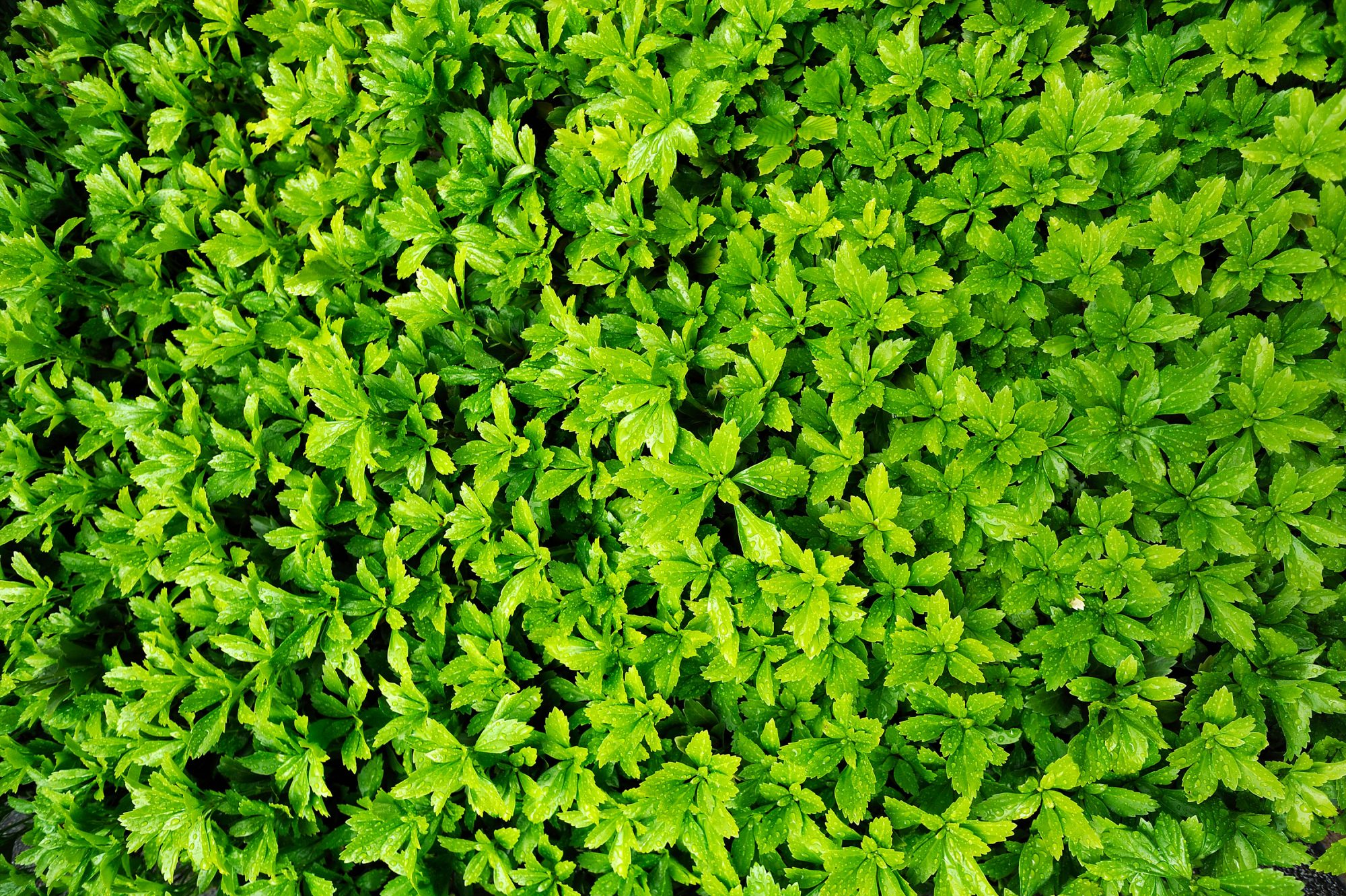 The Best Ground Cover Plants and Flowers for Shade or Sun - Southern
