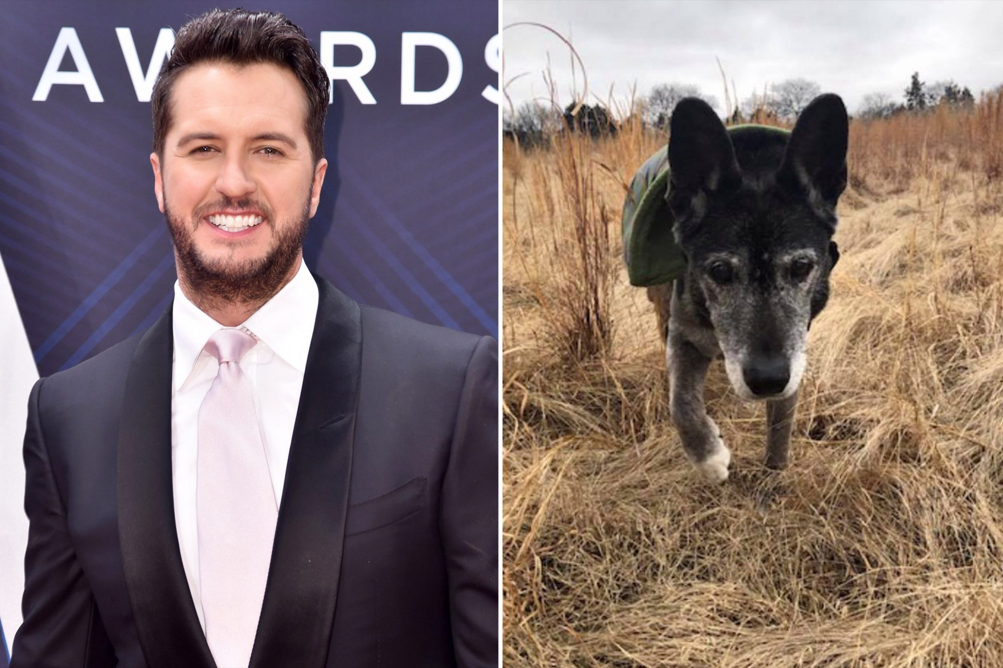 Luke Bryan Adopts 18-Year-Old Rescue Dog After Falling in Love with the Senior Online poochie-4