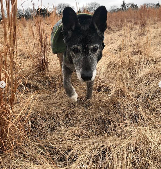 Luke Bryan's Senior Rescue Dog Has Died