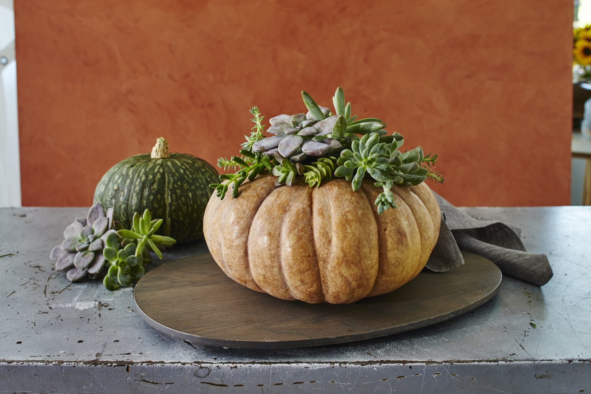RX_1706_Succulent Pumpkin_Thanksgiving Centerpieces