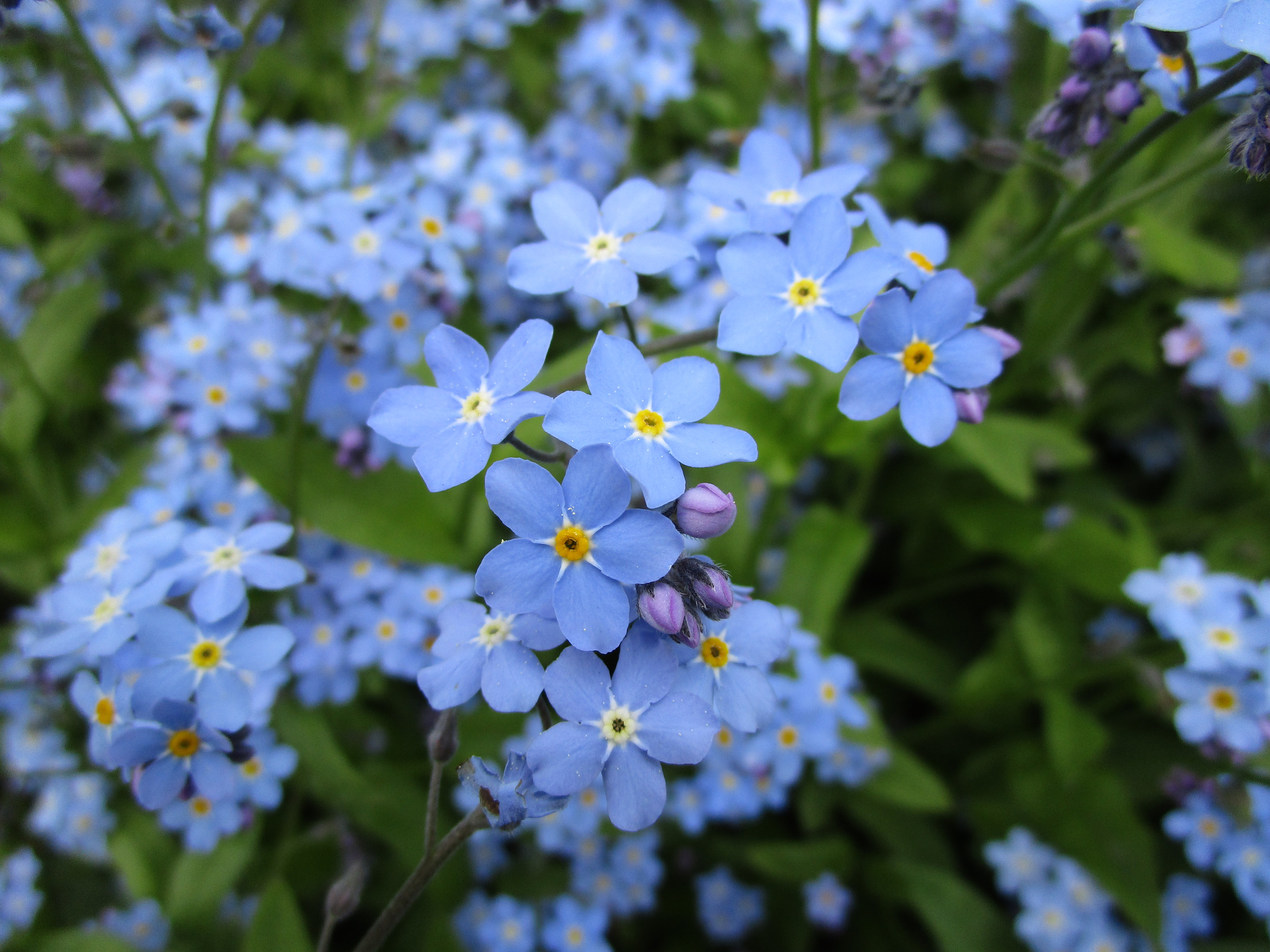 17 Breathtaking Blue Flowers for Your Garden , Southern Living