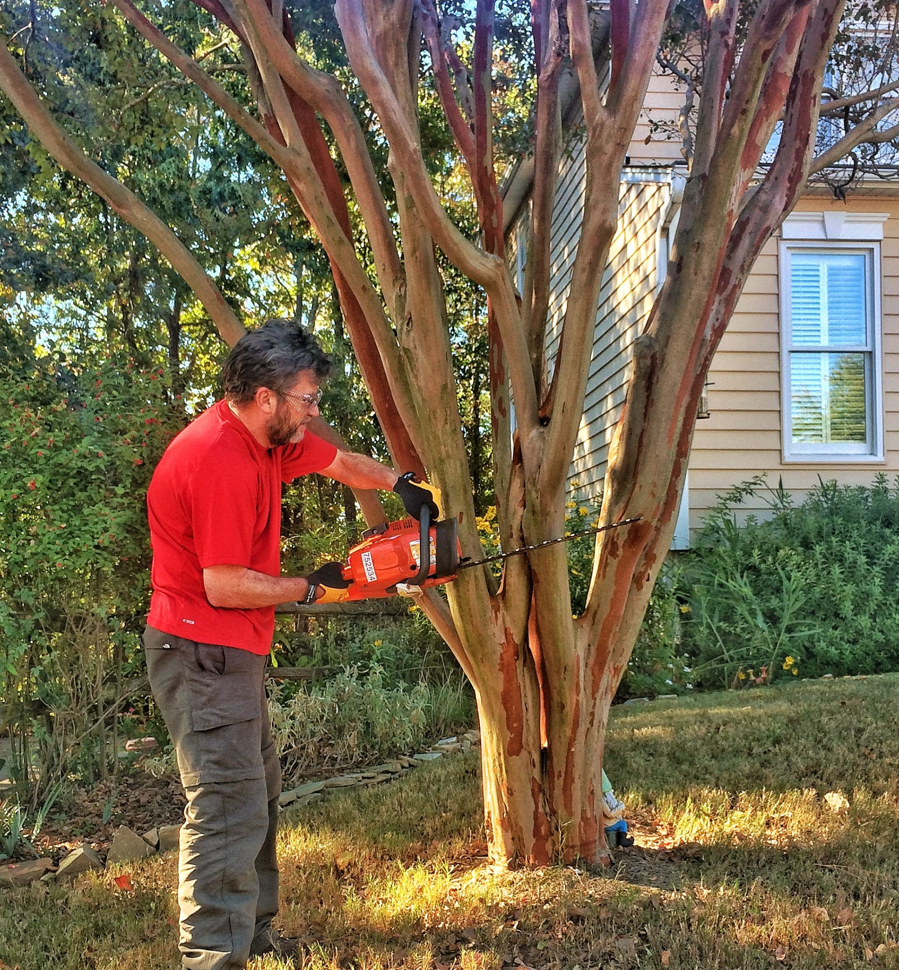 Grumpy with Chainsaw Crepe Myrtle Tree