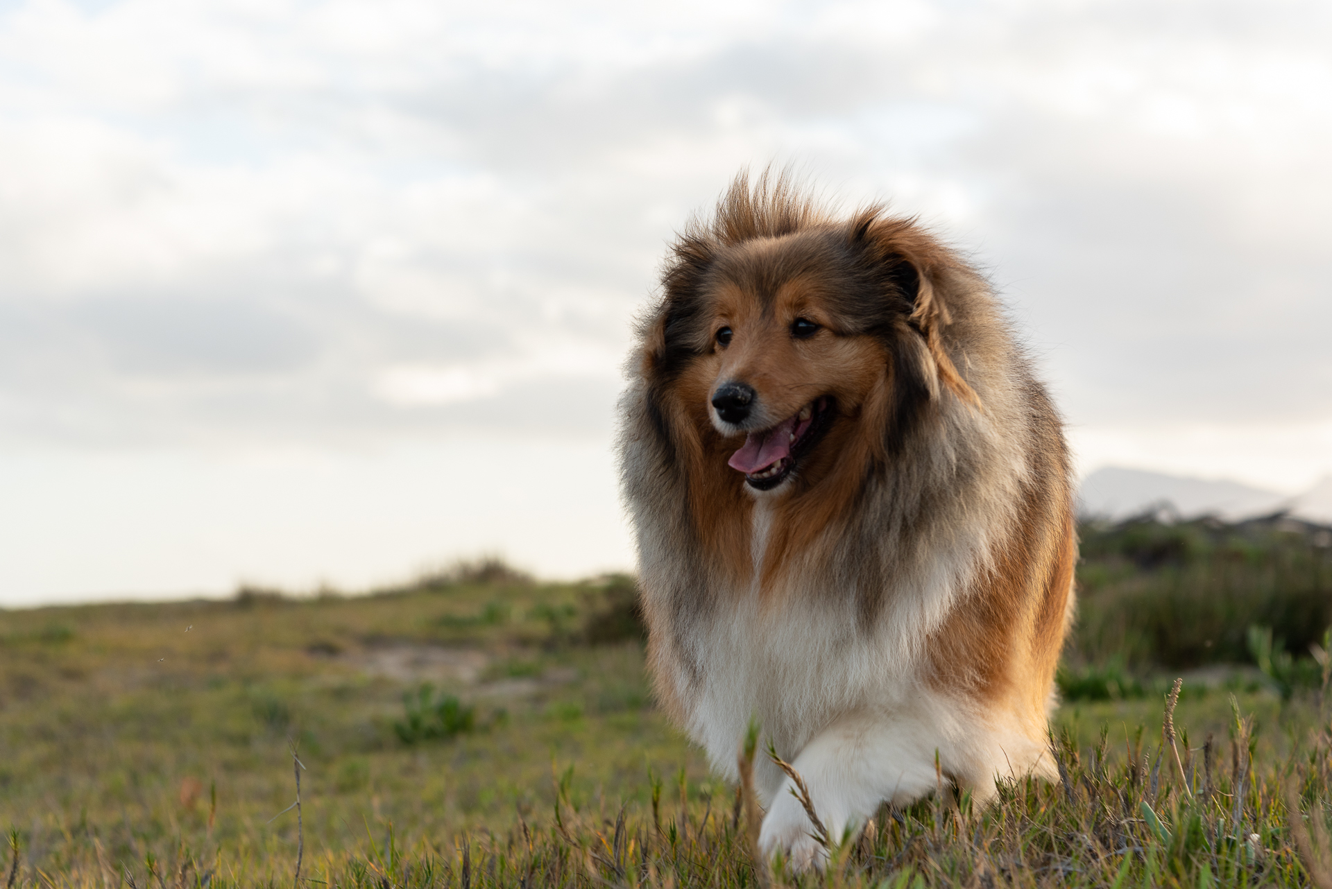 30 Large Dog Breeds that Make The Best Pets