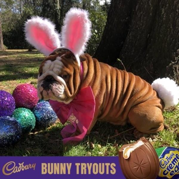 "North Carolina Bulldog Crowned Cadbury's Newest ""Bunny"""
