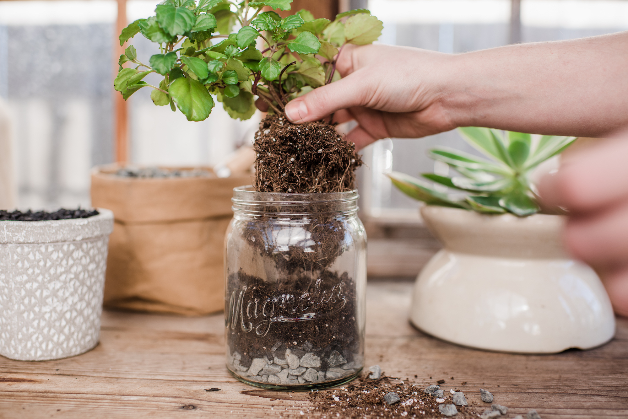 Joanna Gaines' Easy Technique to Pot a Plant Without Drainage Holes