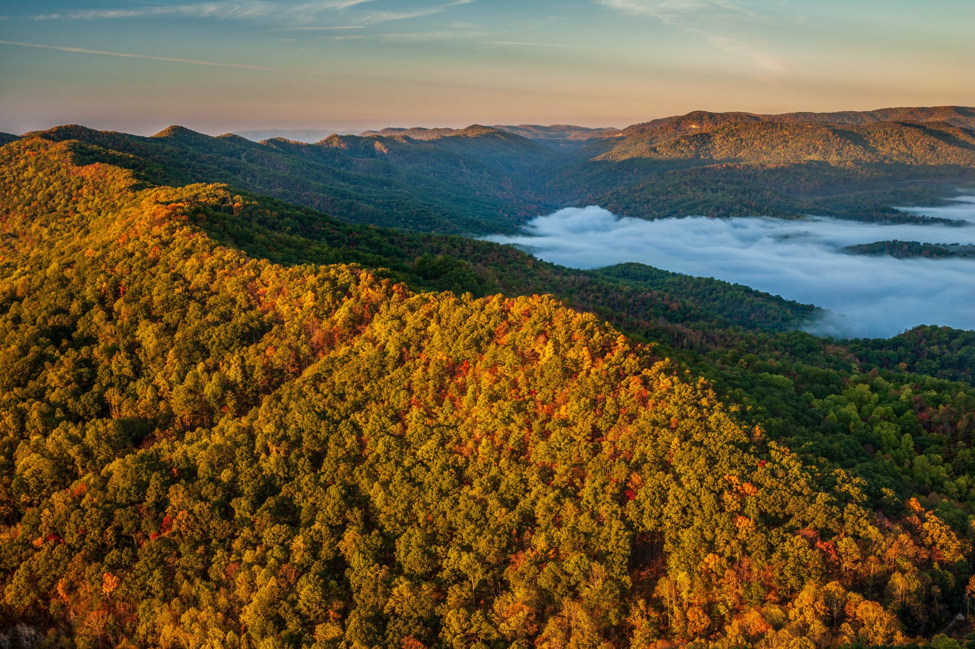 Nonprofit Turning 100,000 Acres of Forest in Tennessee and Kentucky into Wildlife Habitat