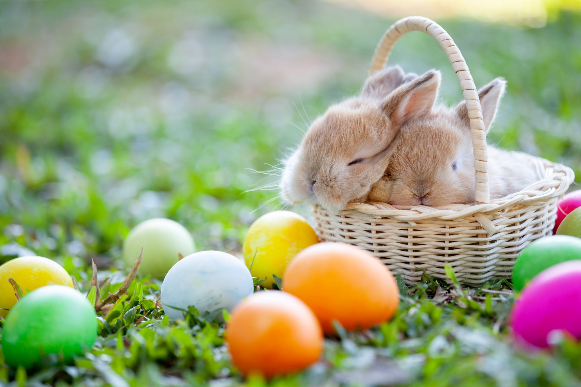 Easter Bunny in Basket and Eggs