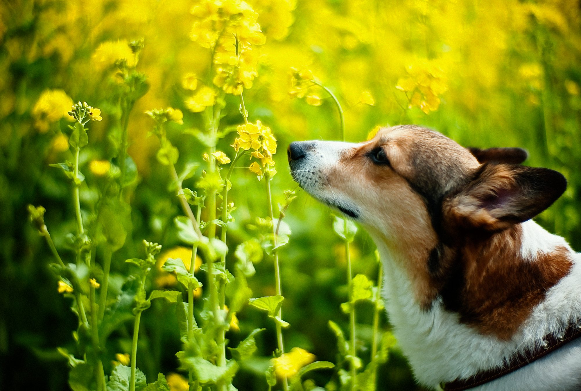 Want to Make Your Dog Happier? Let Him Sniff, Science Says