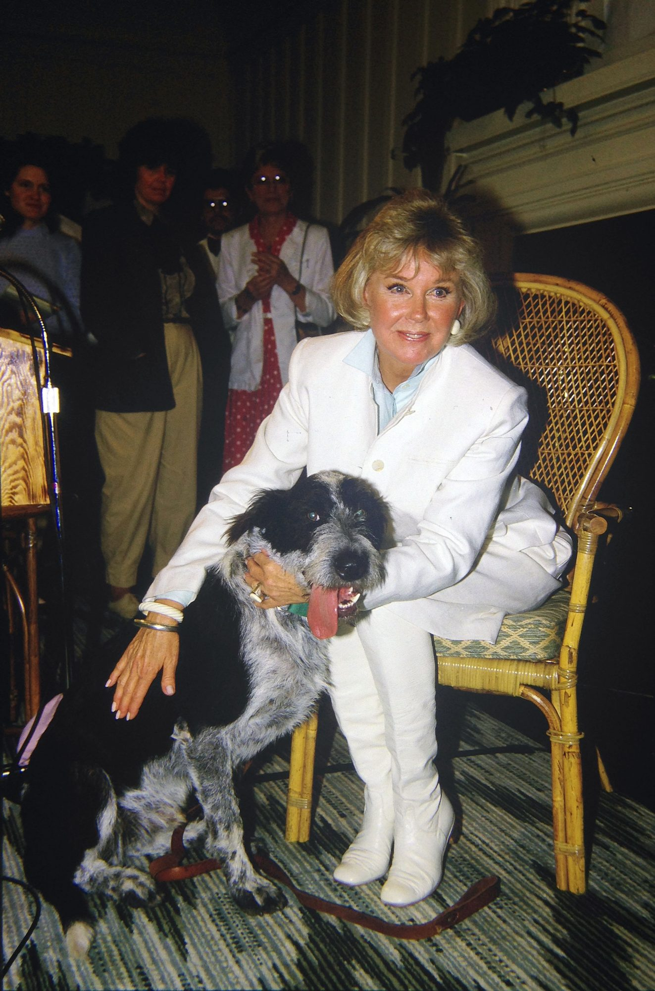 Doris Day Older Dog