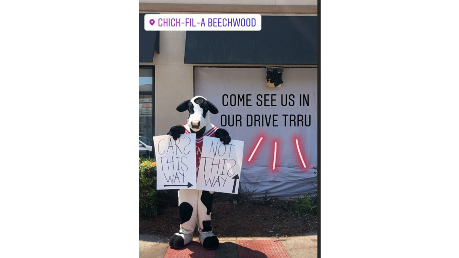 Cow Directs Traffic to Athens Chick fil-A Drive-Thru Hours