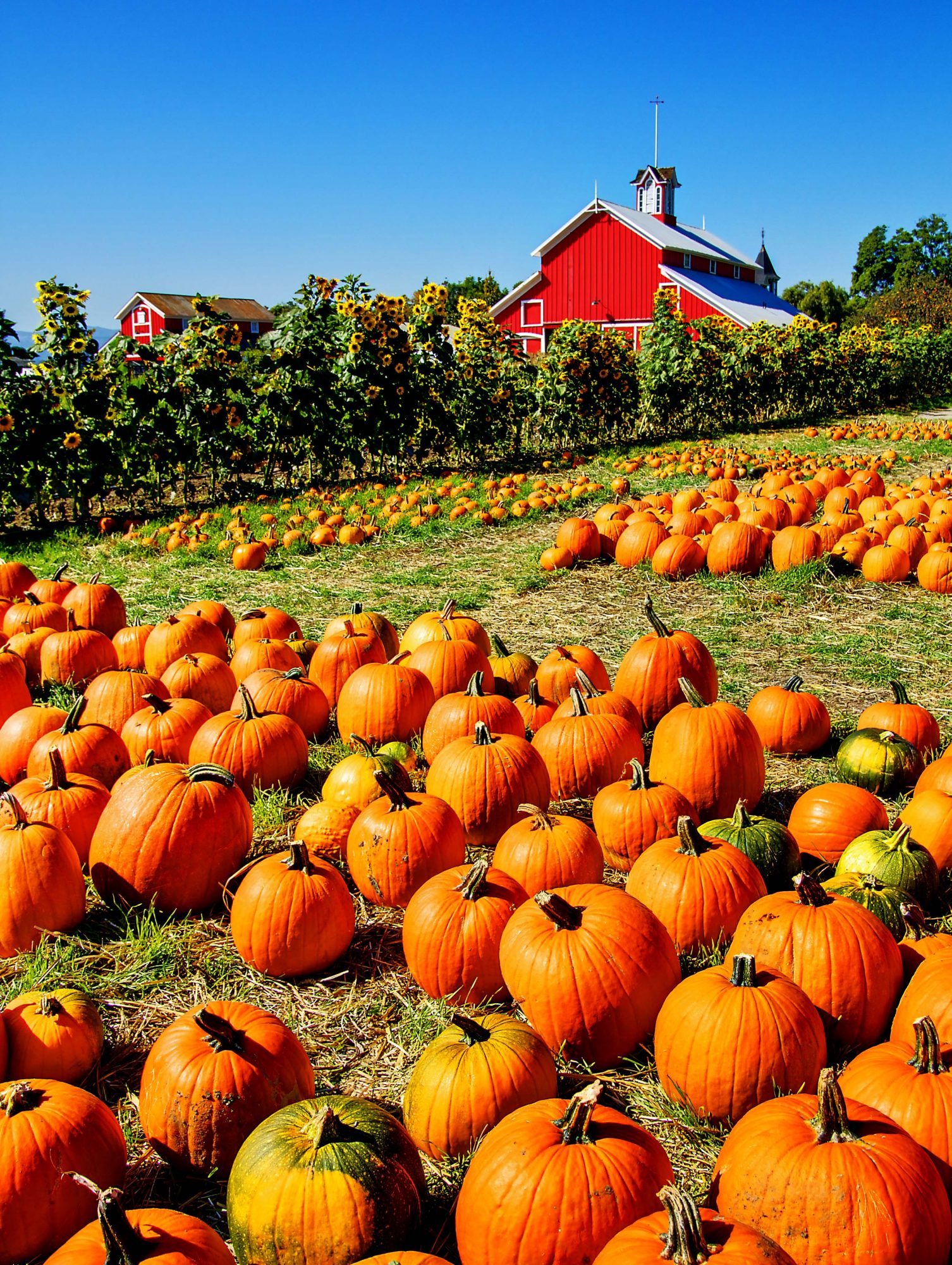 20 incredible ways to decorate with pumpkins this fall southern living - Fall wallpaper pumpkins ...