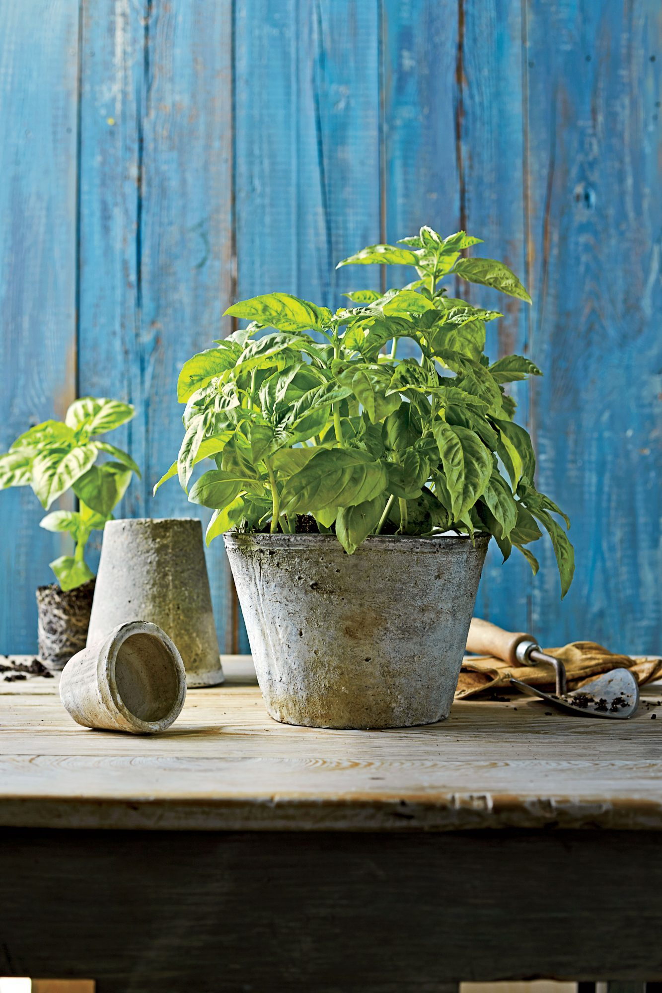 Plant a Basil Herb Garden Southern Living