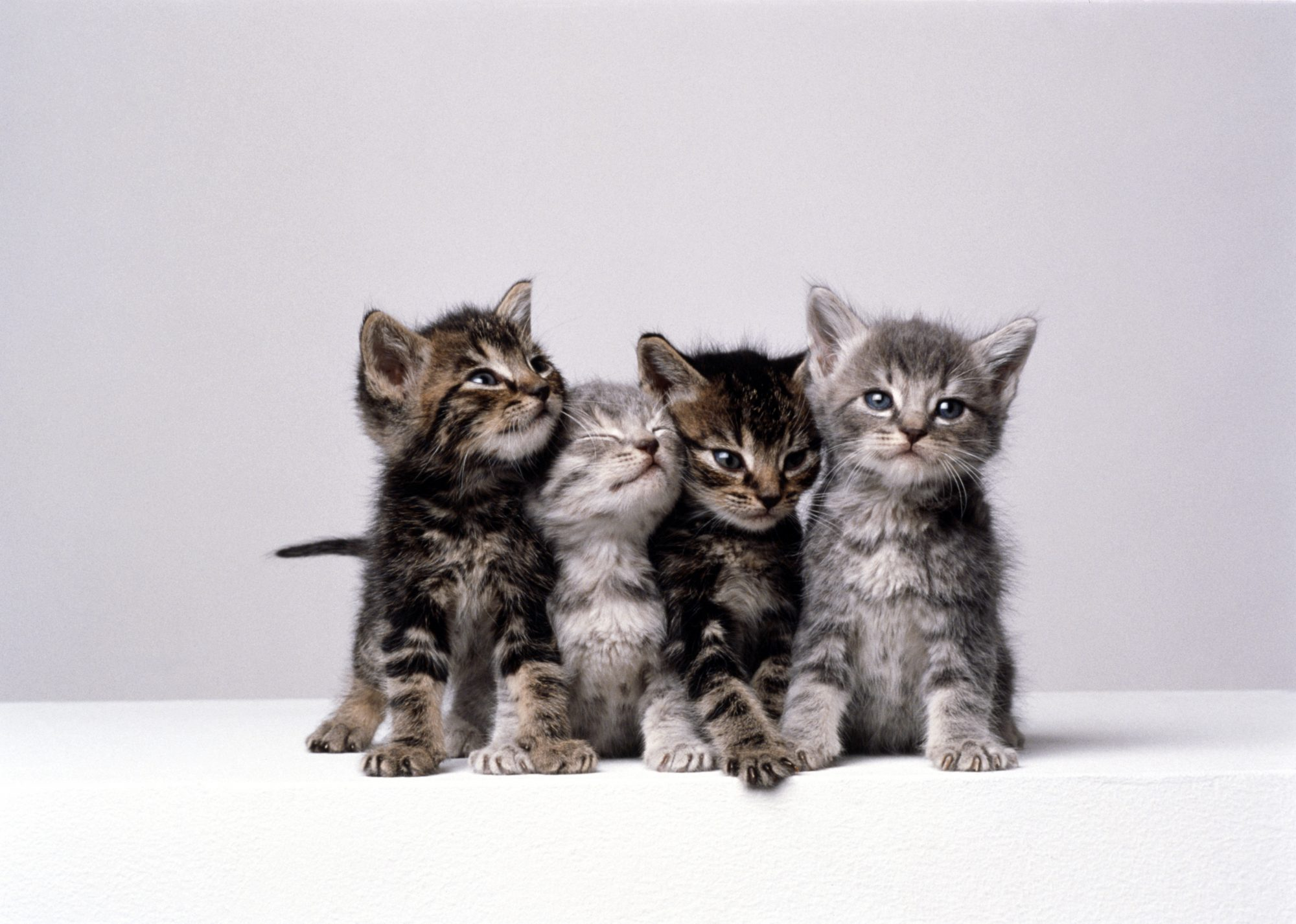 The Best Female Cat Names - You've Got To Be Kitten Me!