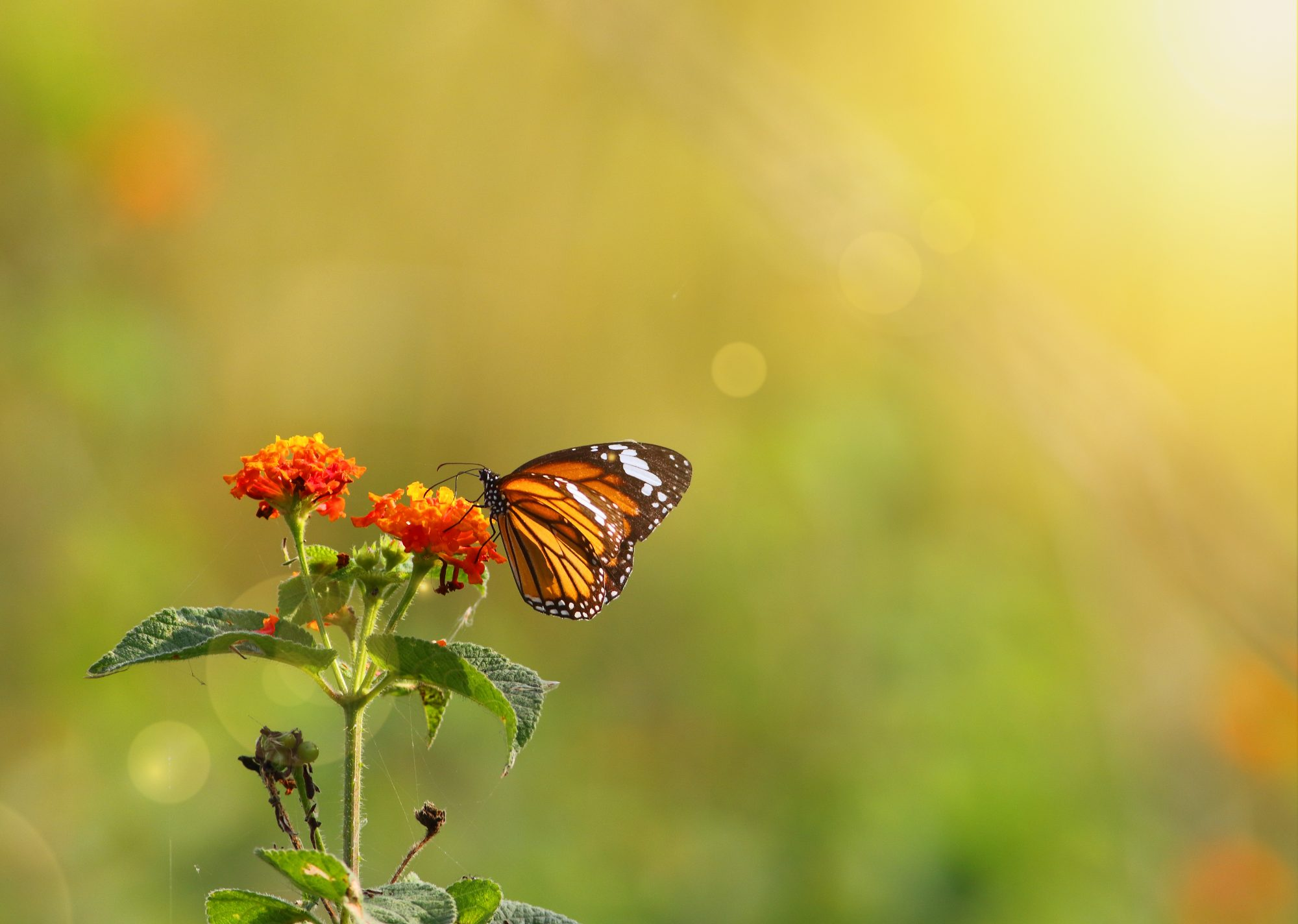 Dahlonega, Georgia Just Welcomed the Most Magical Butterfly Farm in the South