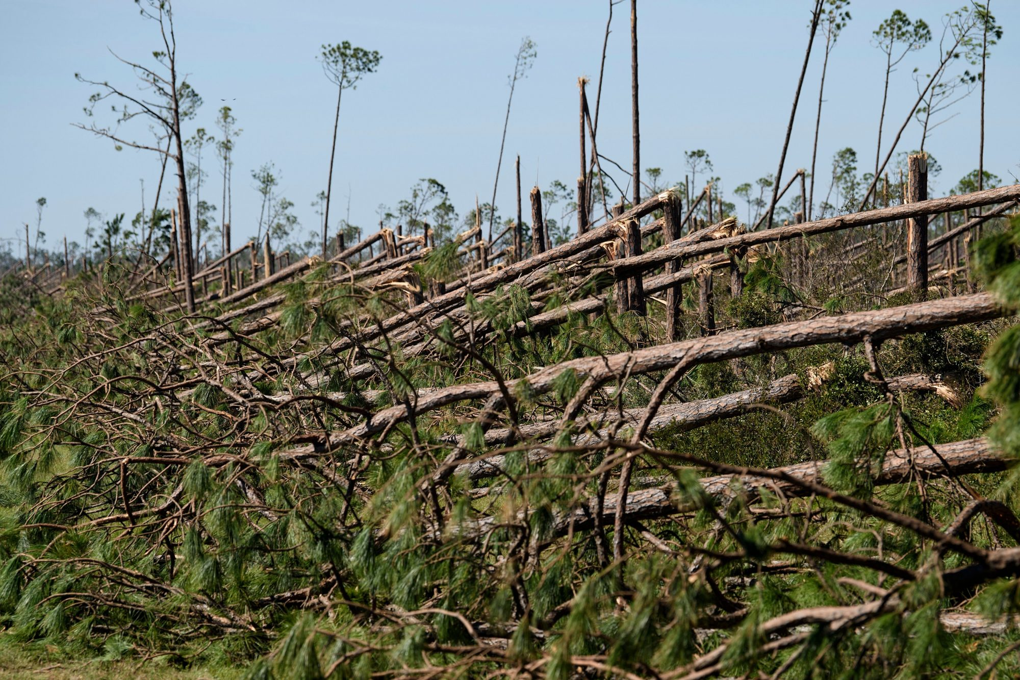 WATCH: 3 Million Acres of Florida Timber Rotting Away 8 Months After Hurricane Michael