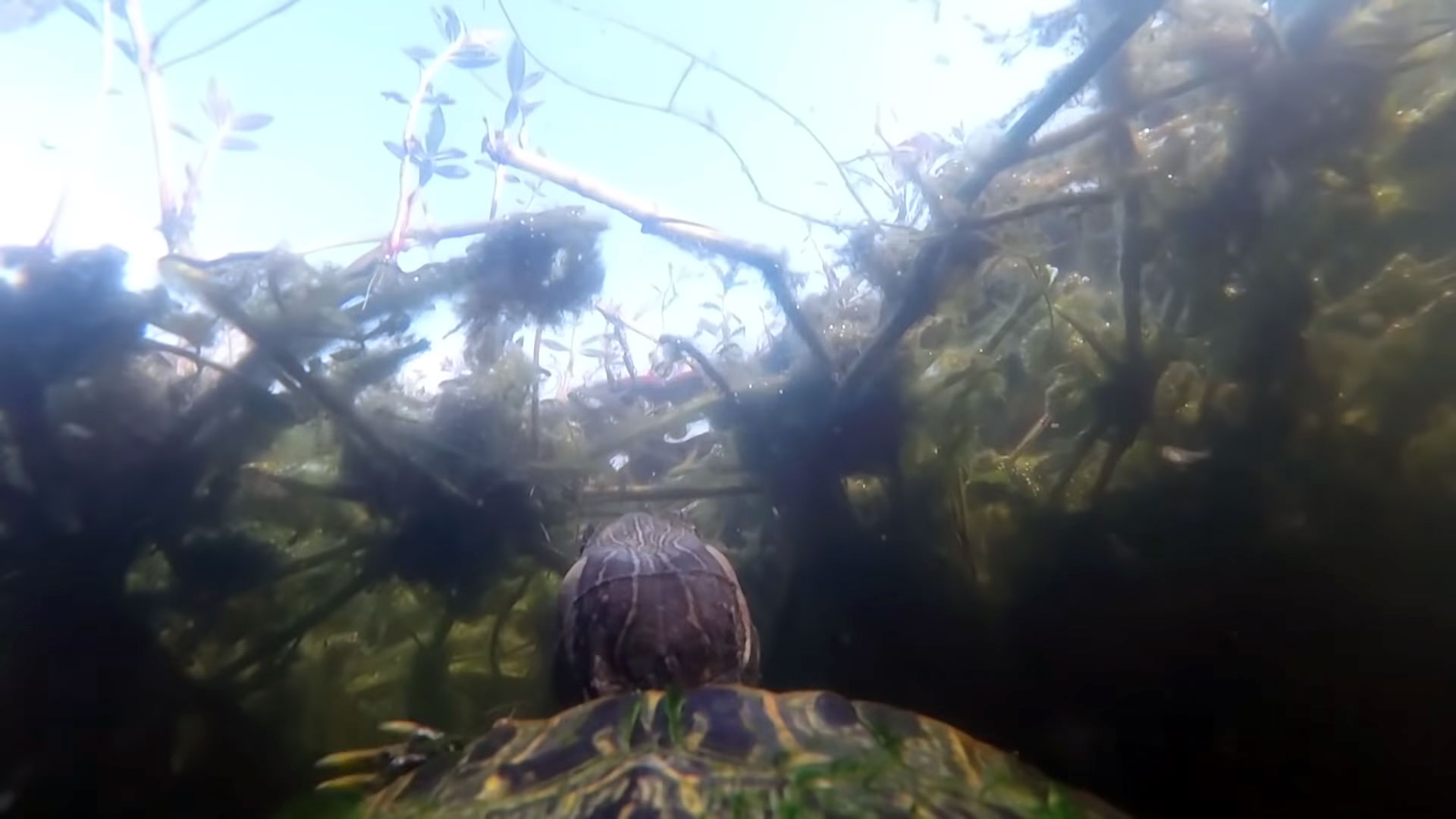 This Texas Turtle Strapped with a GoPro Is Our New Favorite Director