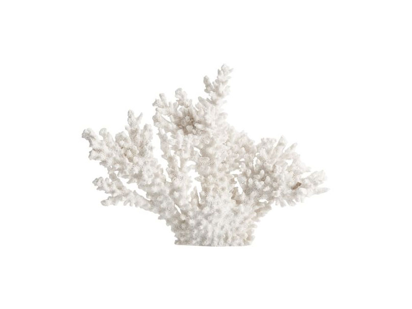 White Spike Coral