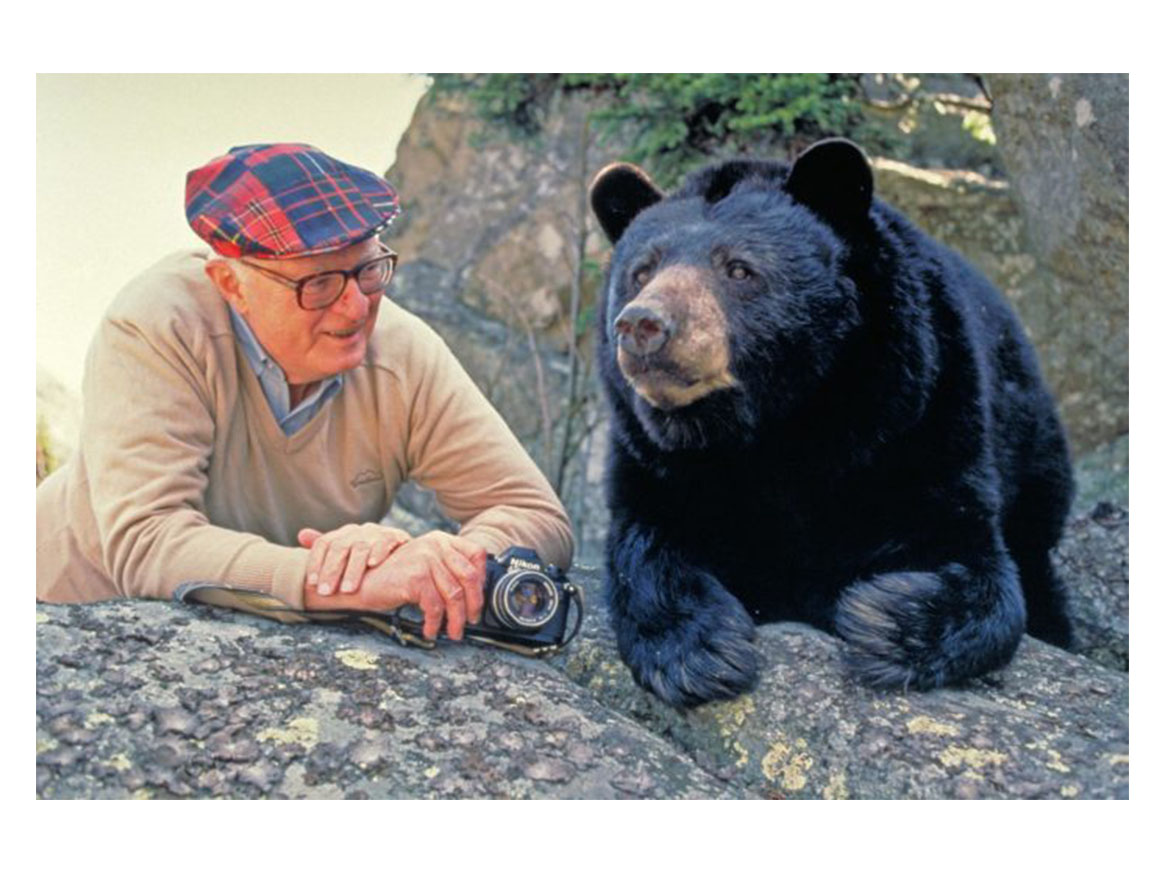 The Story of Mildred the Bear