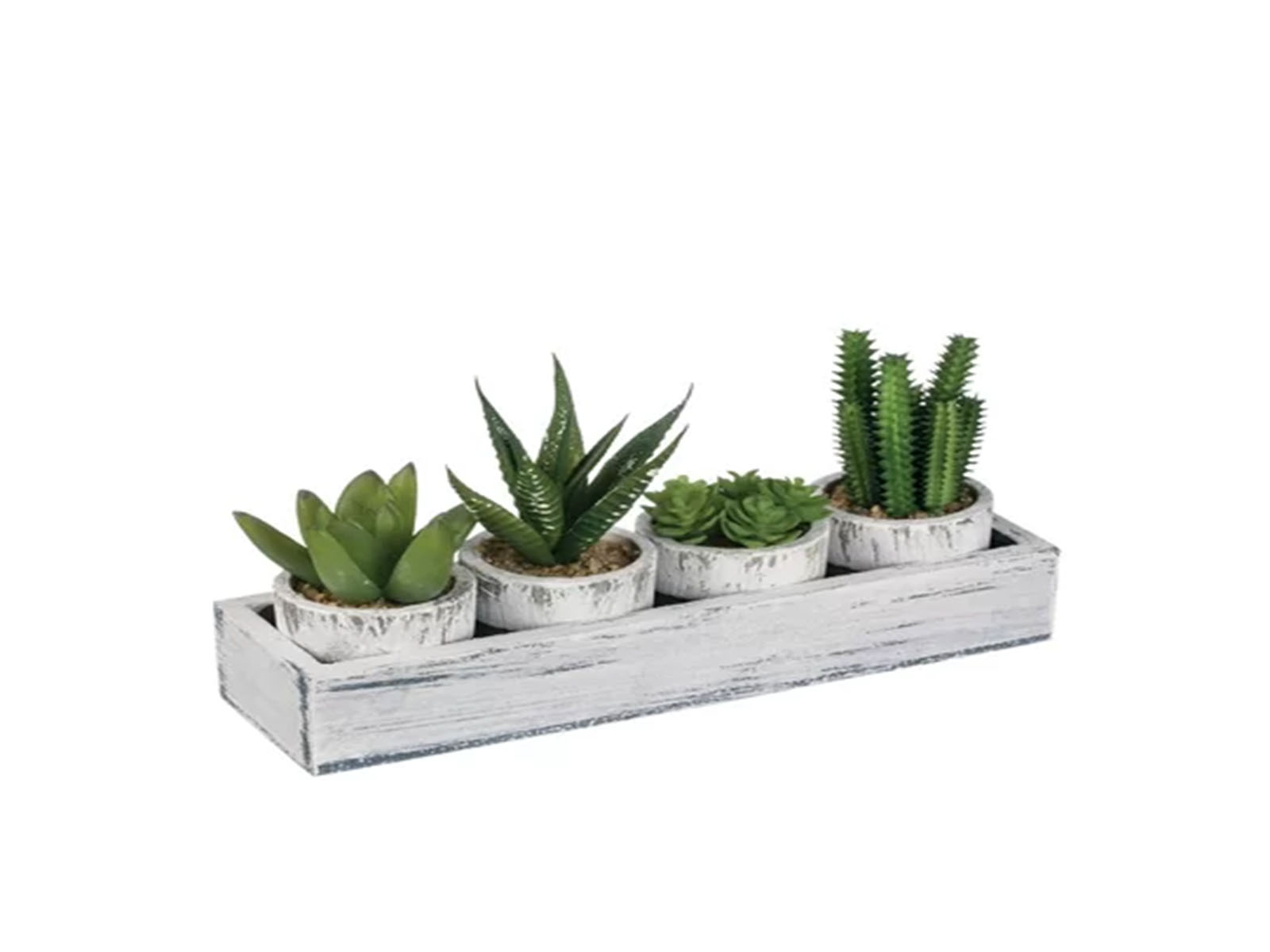 4 Piece Cactus Plant in Tray Set