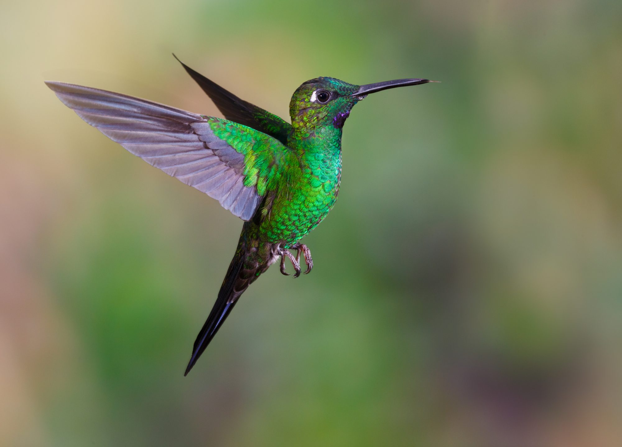 This Southern Climate Is Ideal for Gorgeous Plant with Hummingbird-Shaped Flowers