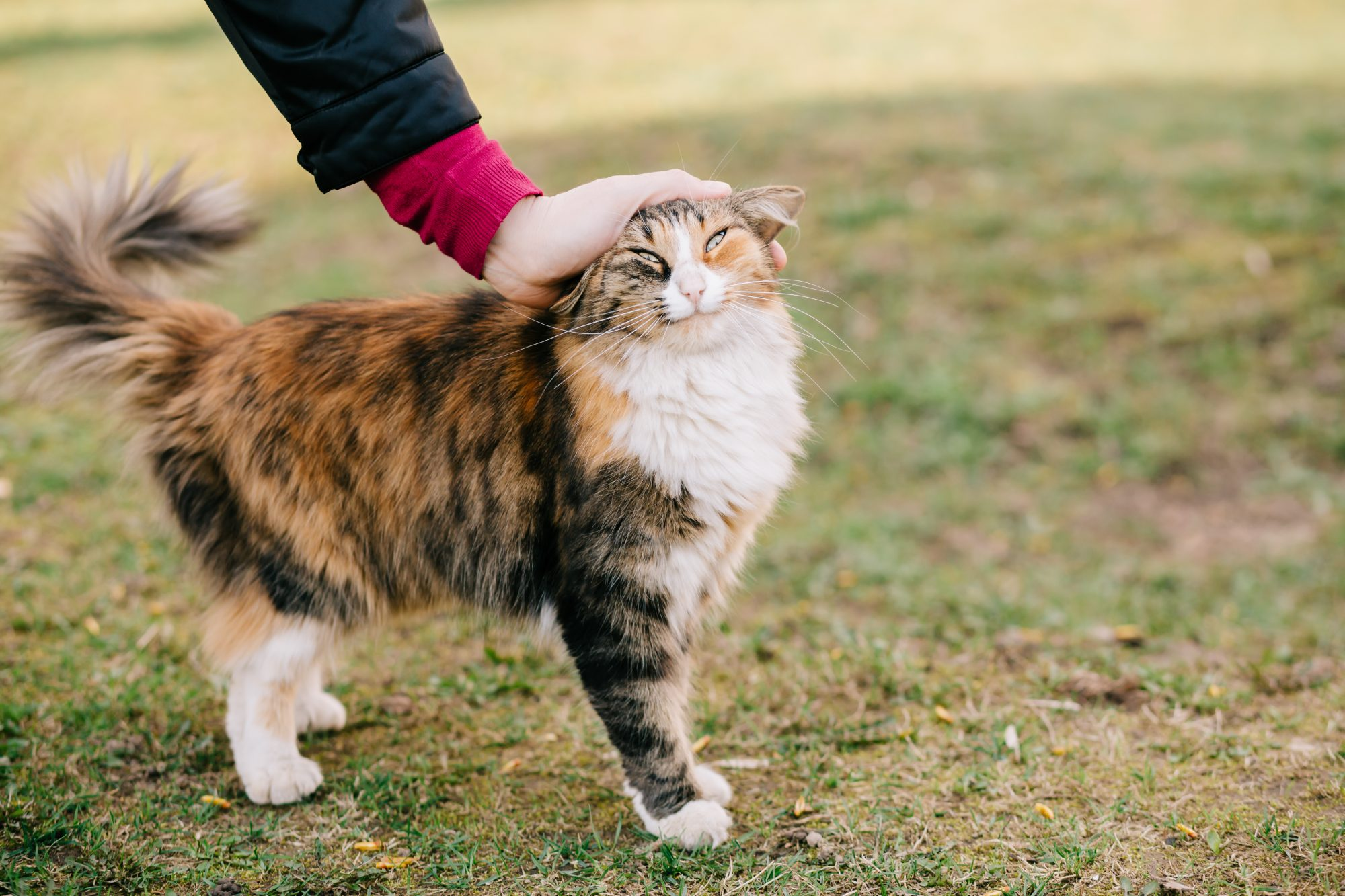 How to Actually Pet Your Cat, Because You're Probably Doing It Wrong