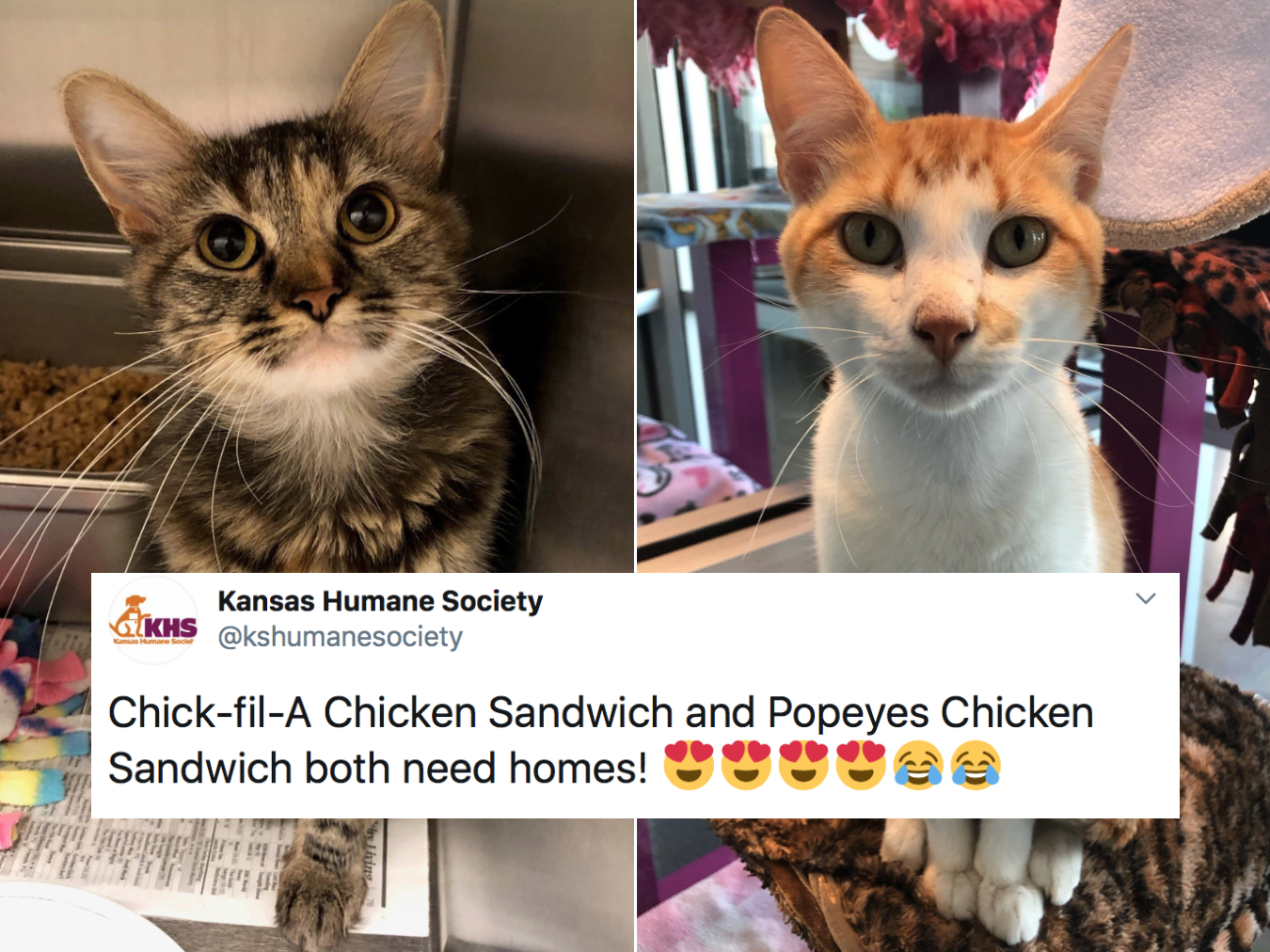 These Adoptable Cats Are Named After Chicken Sandwiches and It's Adorable