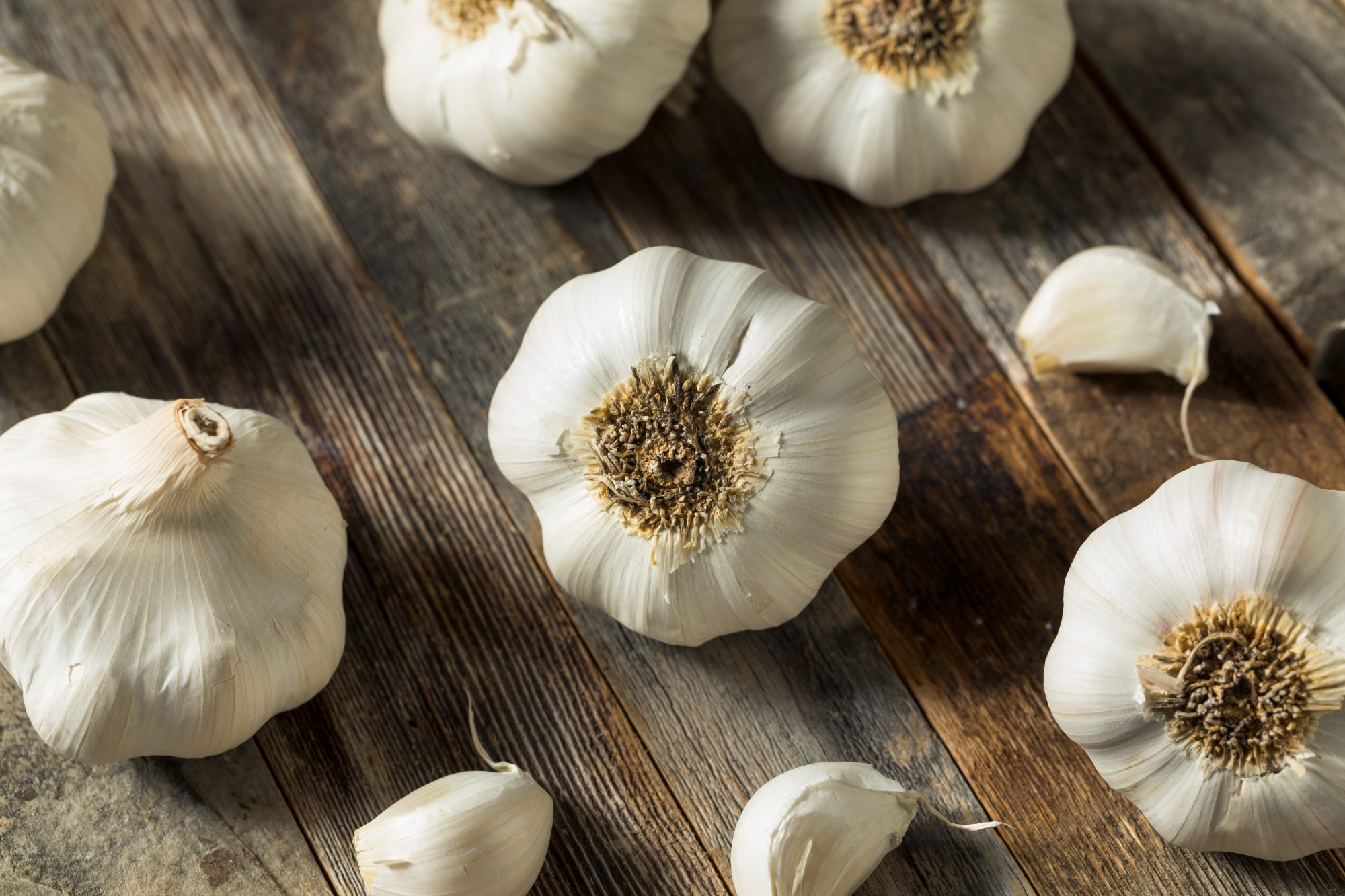 Fall Is Prime Time for Planting Garlic