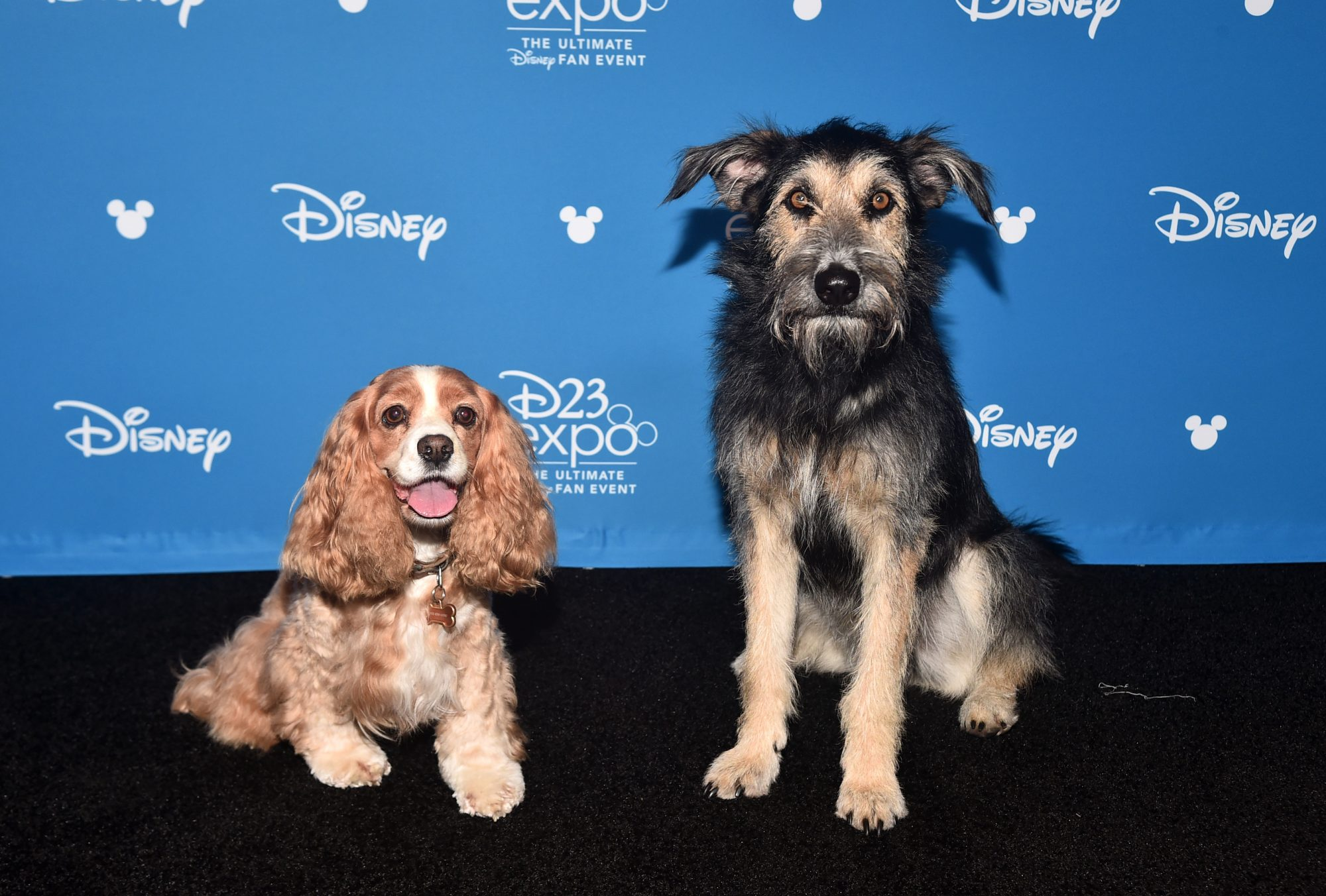 Monte and Rose of Lady and the Tramp