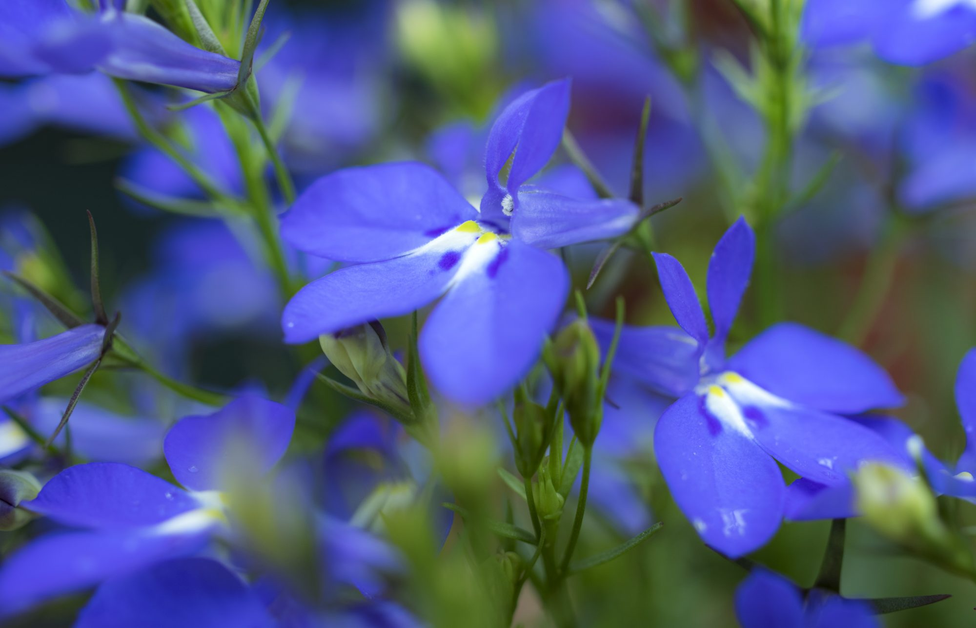 Friends in Low-Light Places: Flowers and Shrubs That Thrive in the Shade