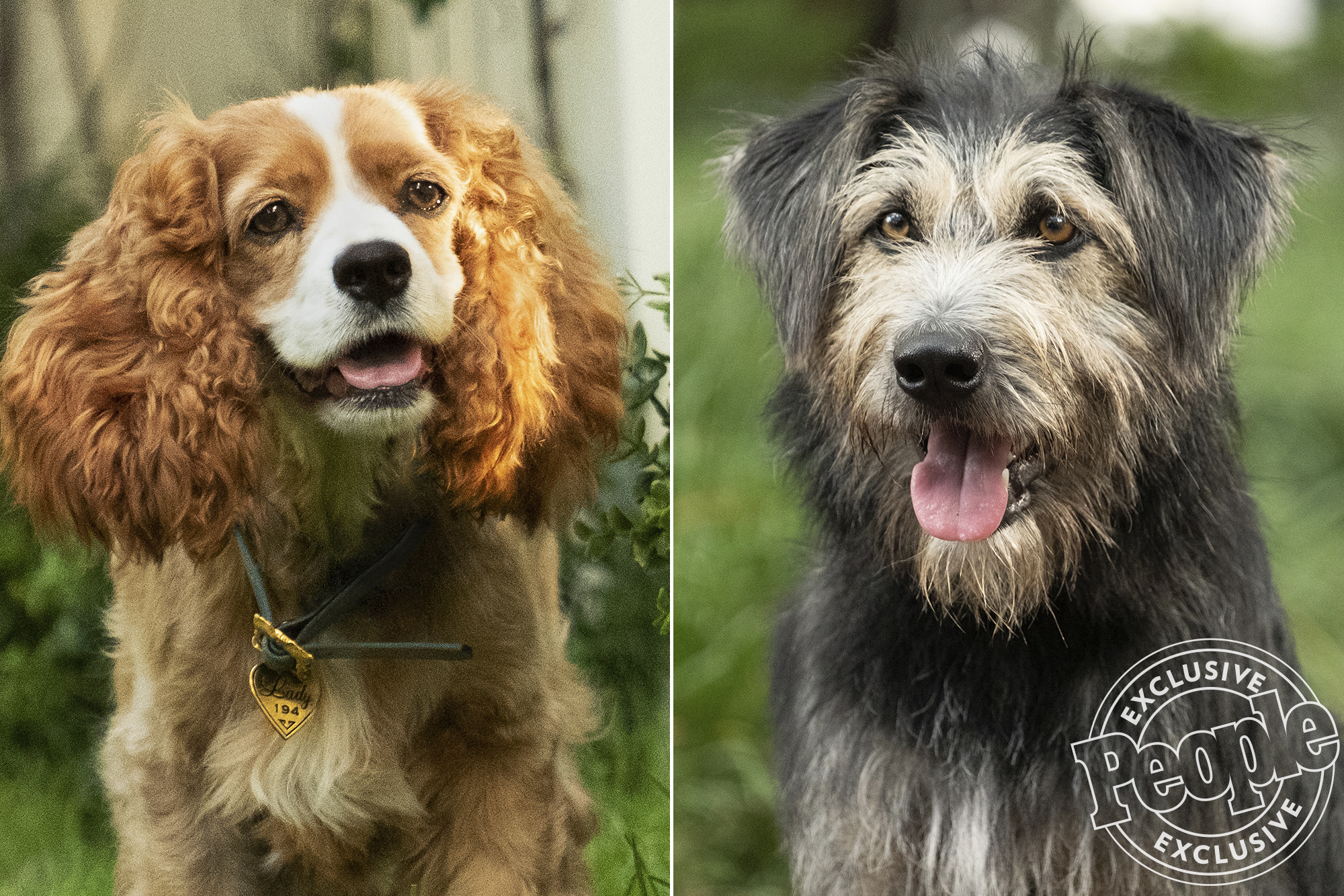 Disney Releases First Official Trailer for Live-Action Lady and the Tramp