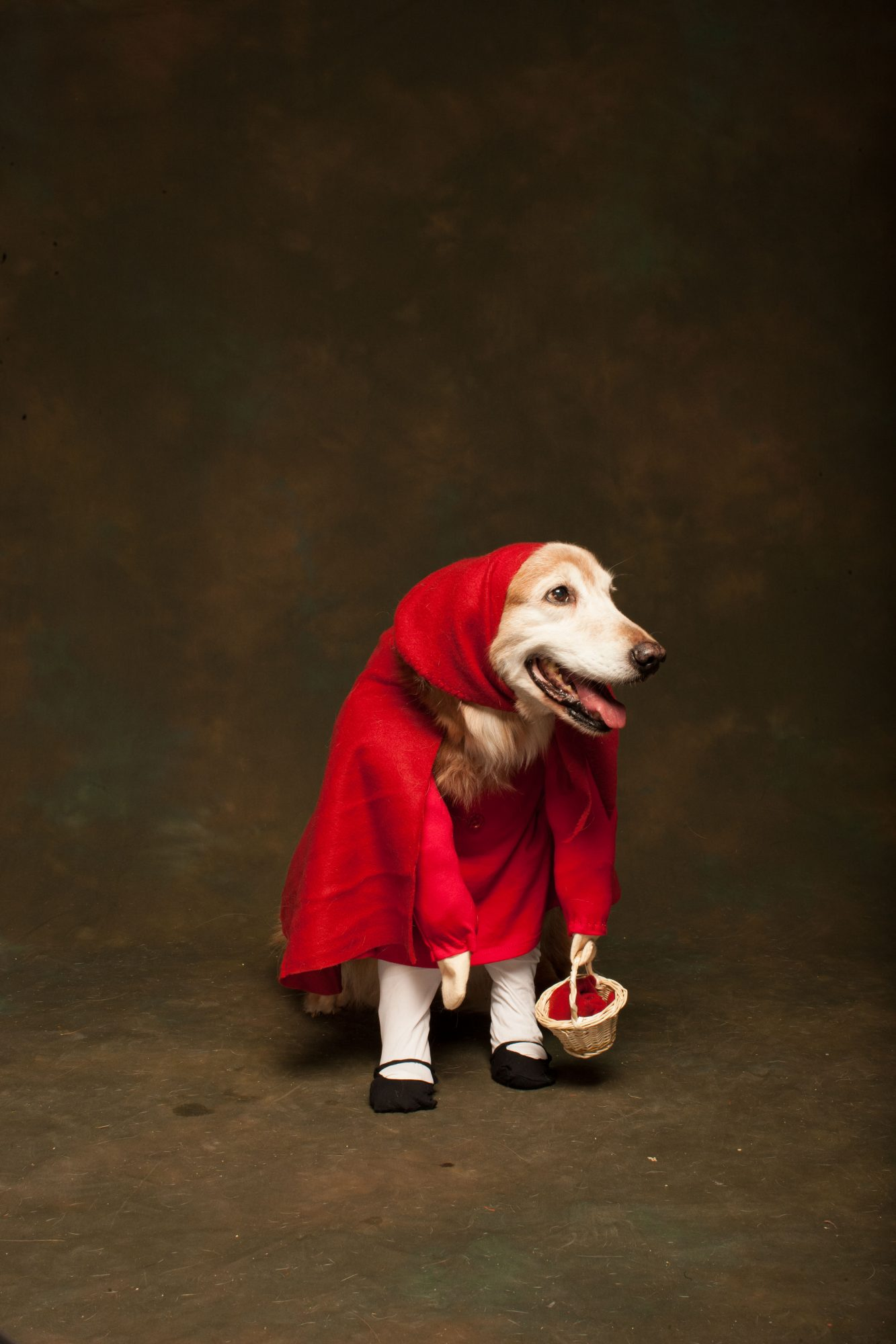 Little Red Riding Hood Dog