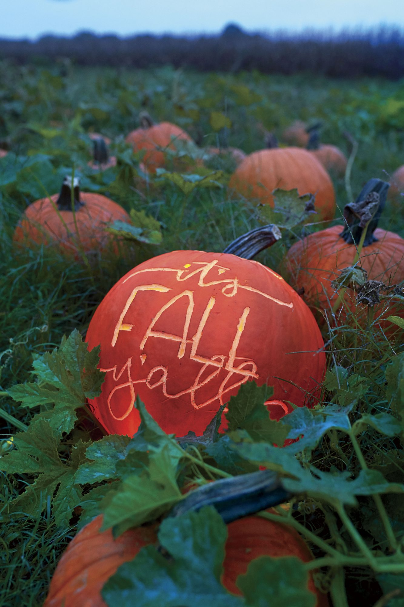 Katie Jacobs Fall Tailgate at Pumpkin Patch with It's Fall Y'all Pumpkin