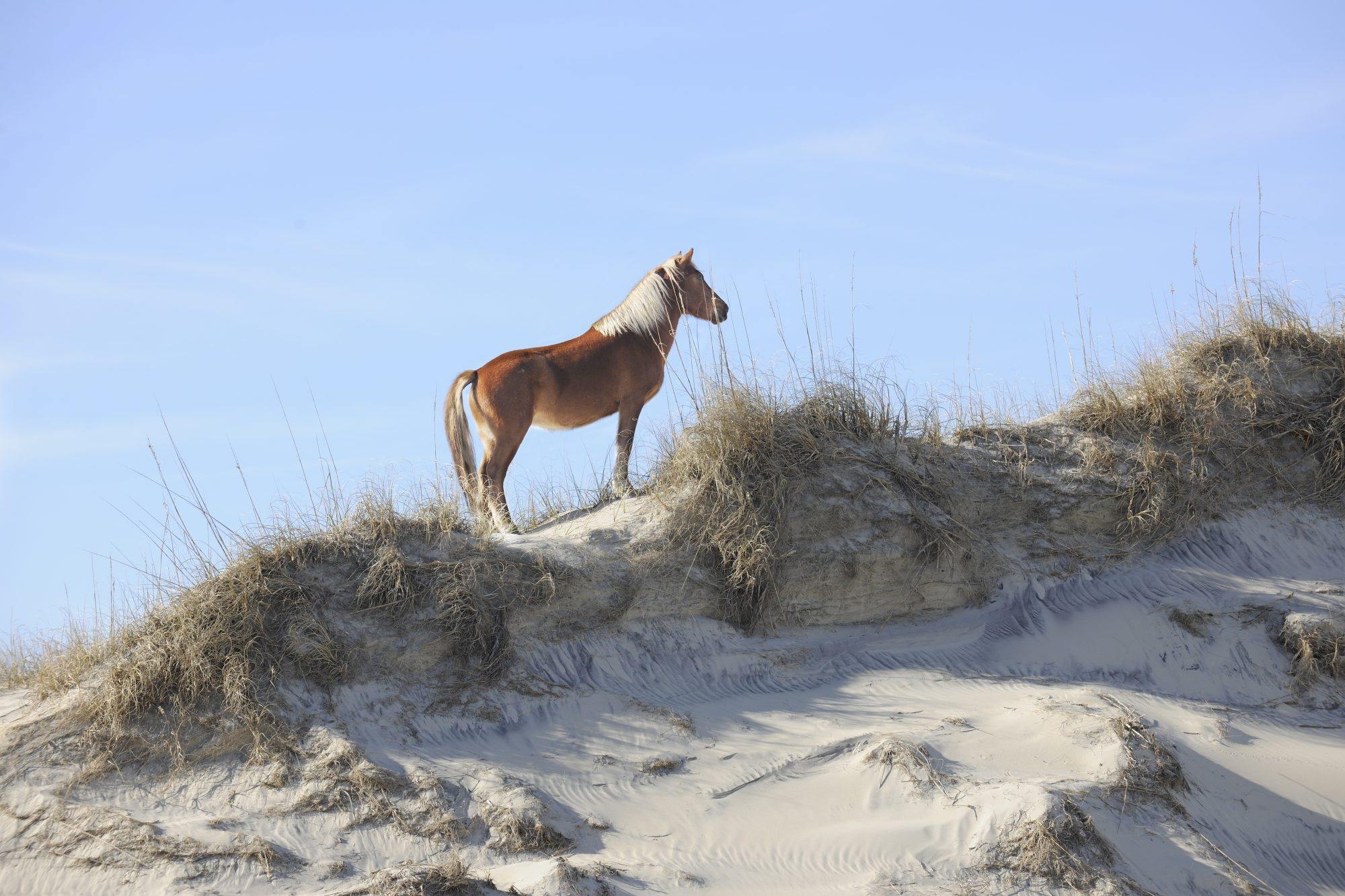 Wild Horse Outer Banks