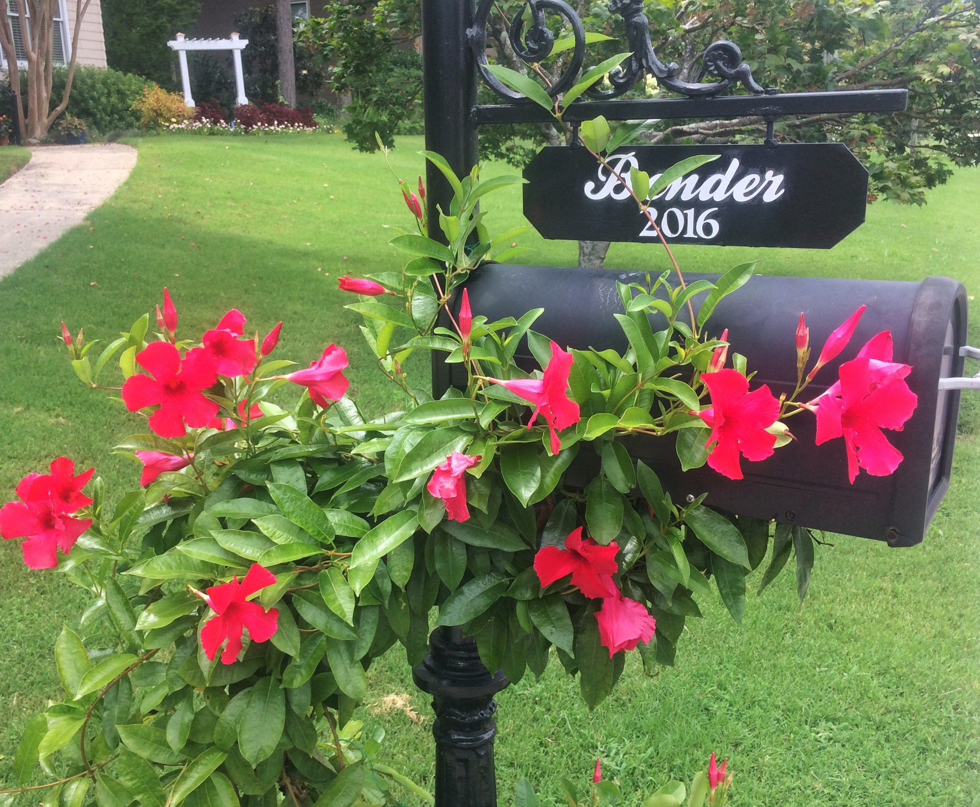 The Best Flowers To Use Around Your Mailbox