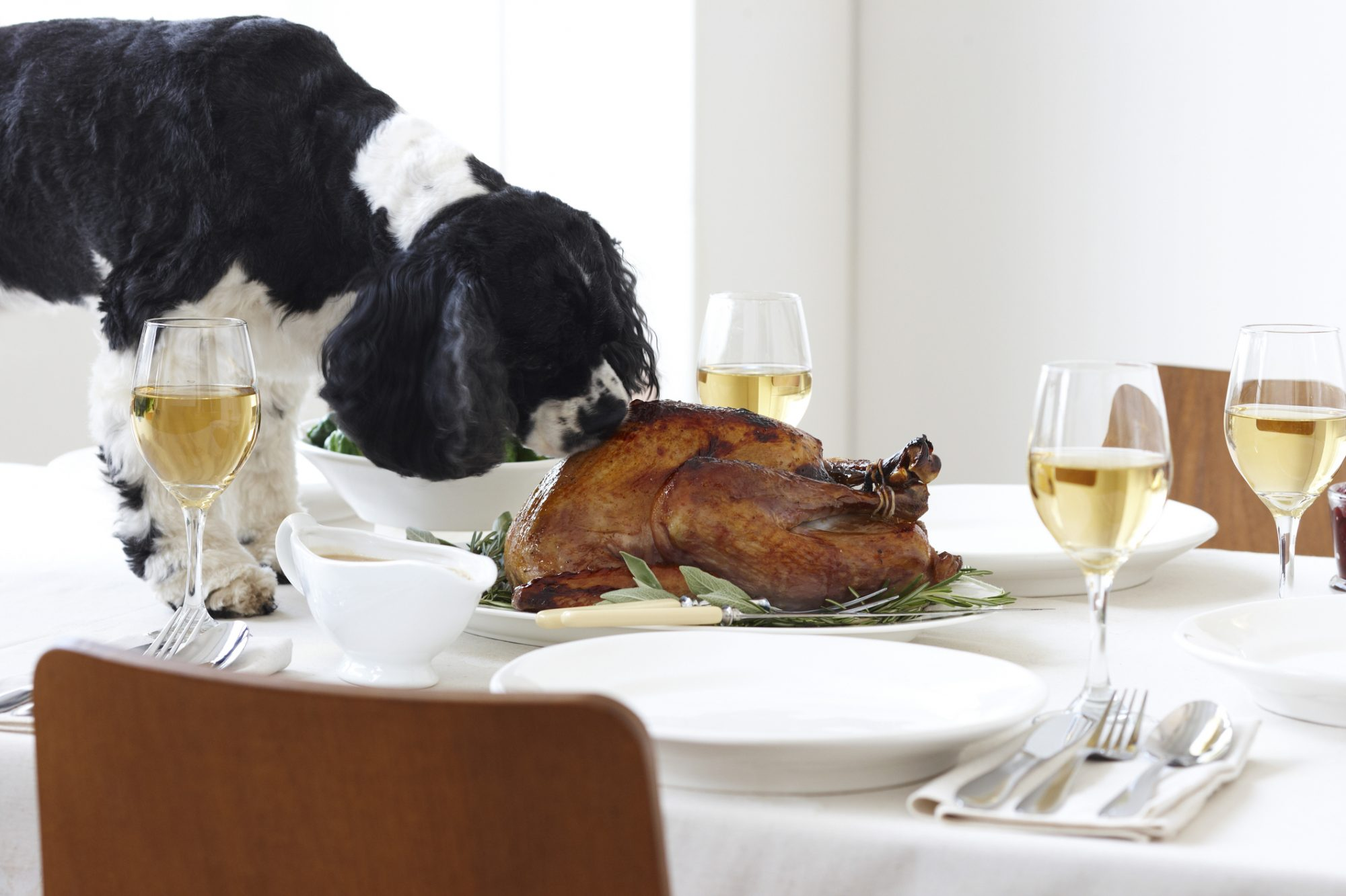 Dog Eating Thanksgiving Turkey