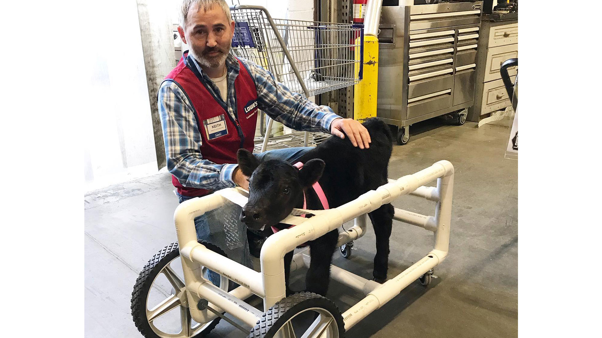 North Carolina Lowe's Employee Builds Wheelchair for Injured Calf